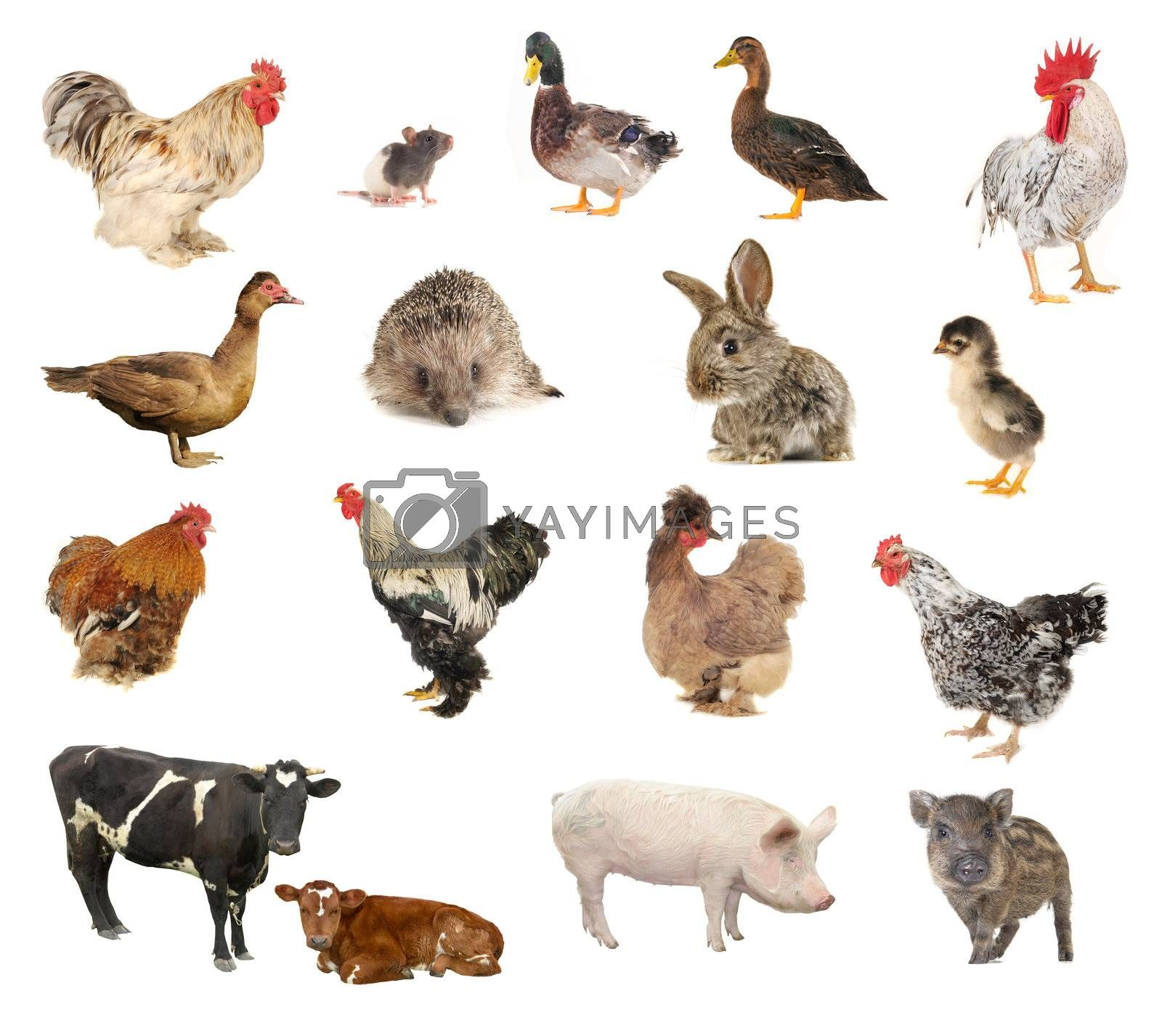 pets on a white background