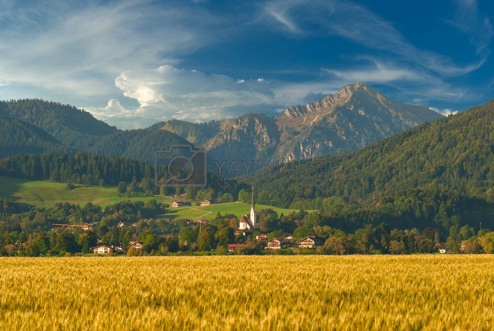 Beautiful summer landscape with golden wheat field and mountains on background