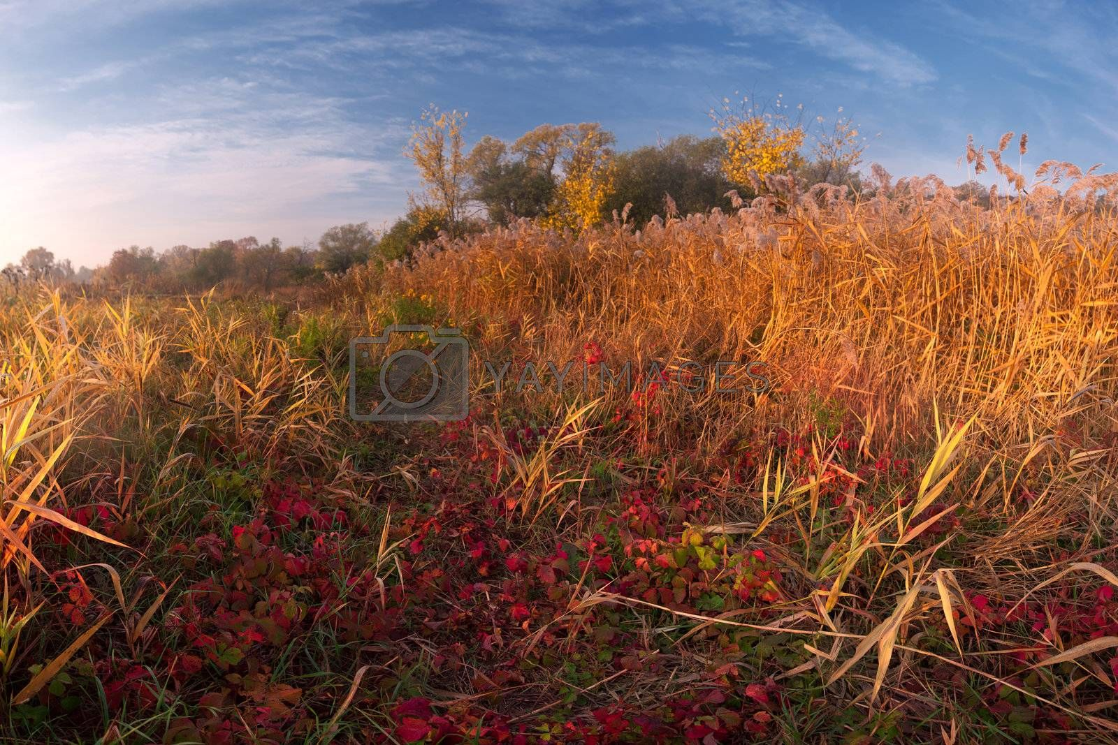 Colorful autumn landscape with bright yellow and red grass