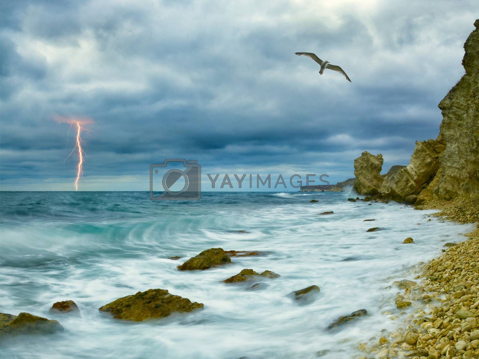 Seagull over ocean, comes nearer a thunder-storm towards the coast from rocks and lightning on background