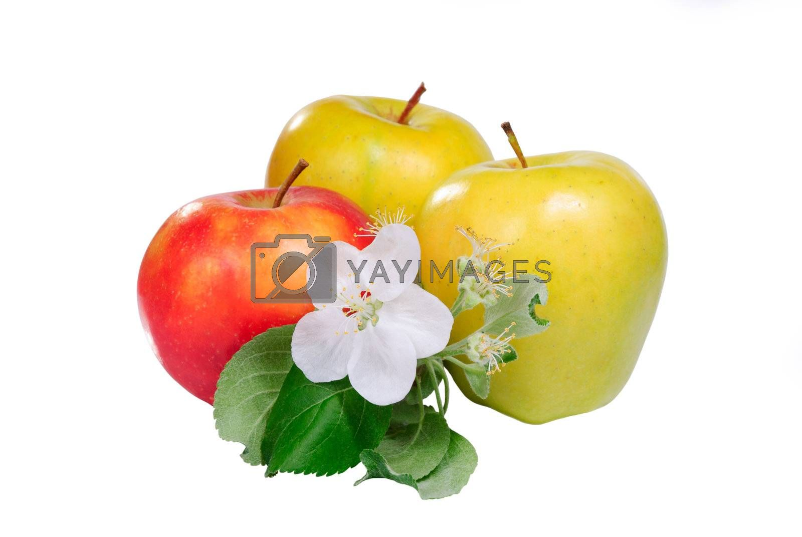 Red and yellow apple with flower isolated on white background