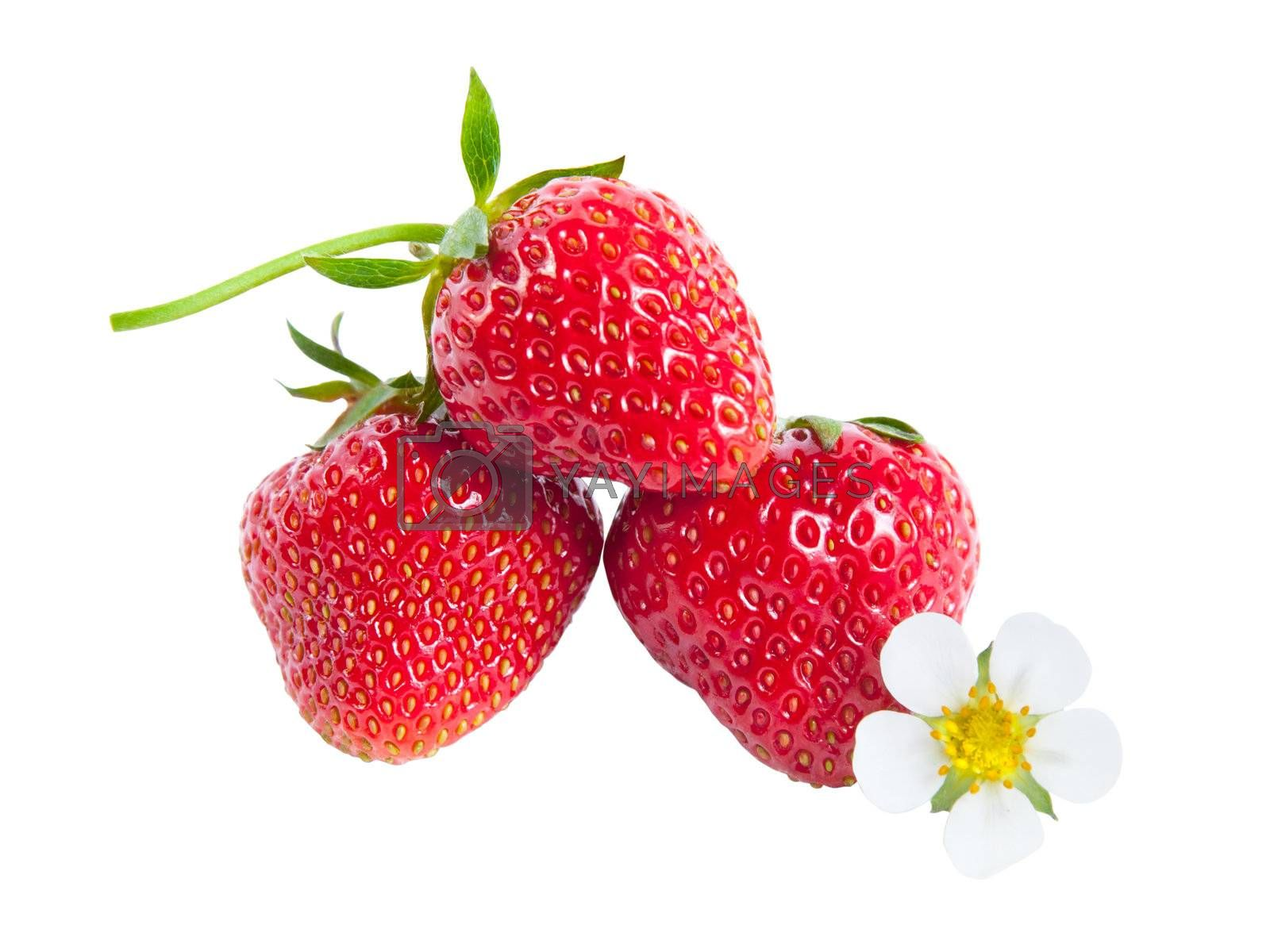 Strawberries with flower isolated on white background