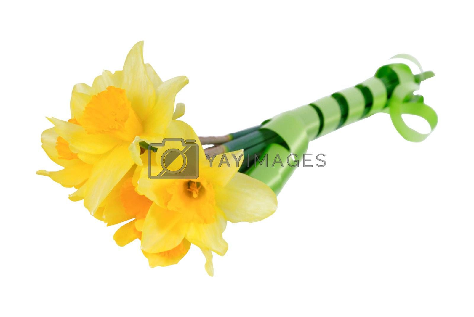 Bouquet of yellow narcissus with green tape isolated on a white background