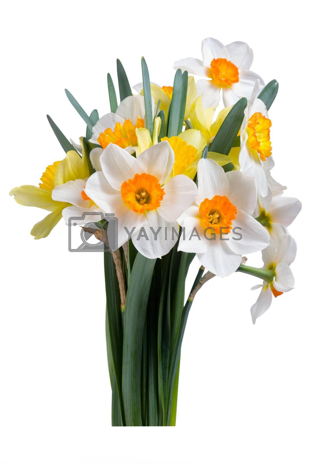 Beautyful bouquet of yellow and white narcissus with leaves isolated on a white background