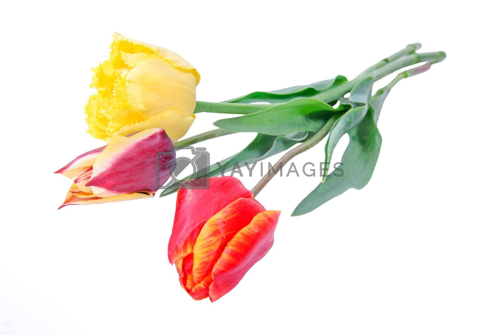 Beautyful bouquet of different tulips isolated on a white background