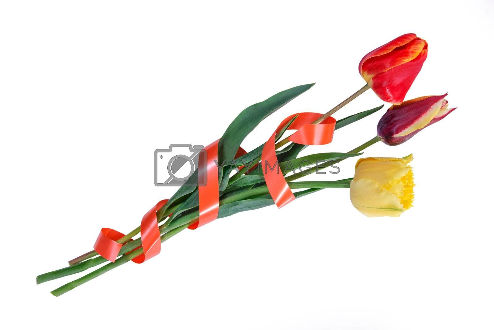 Beautyful bouquet three tulips with tape isolated on a white background