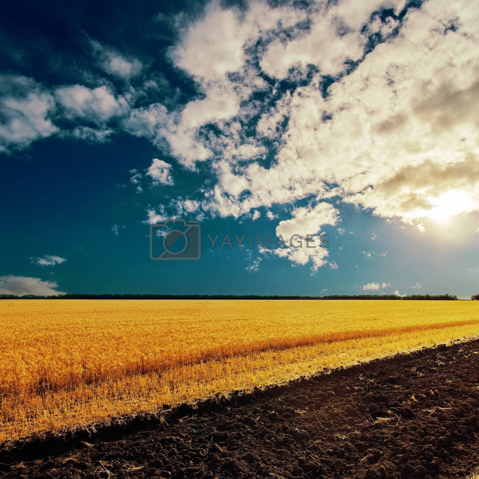 sunset and field with harvest