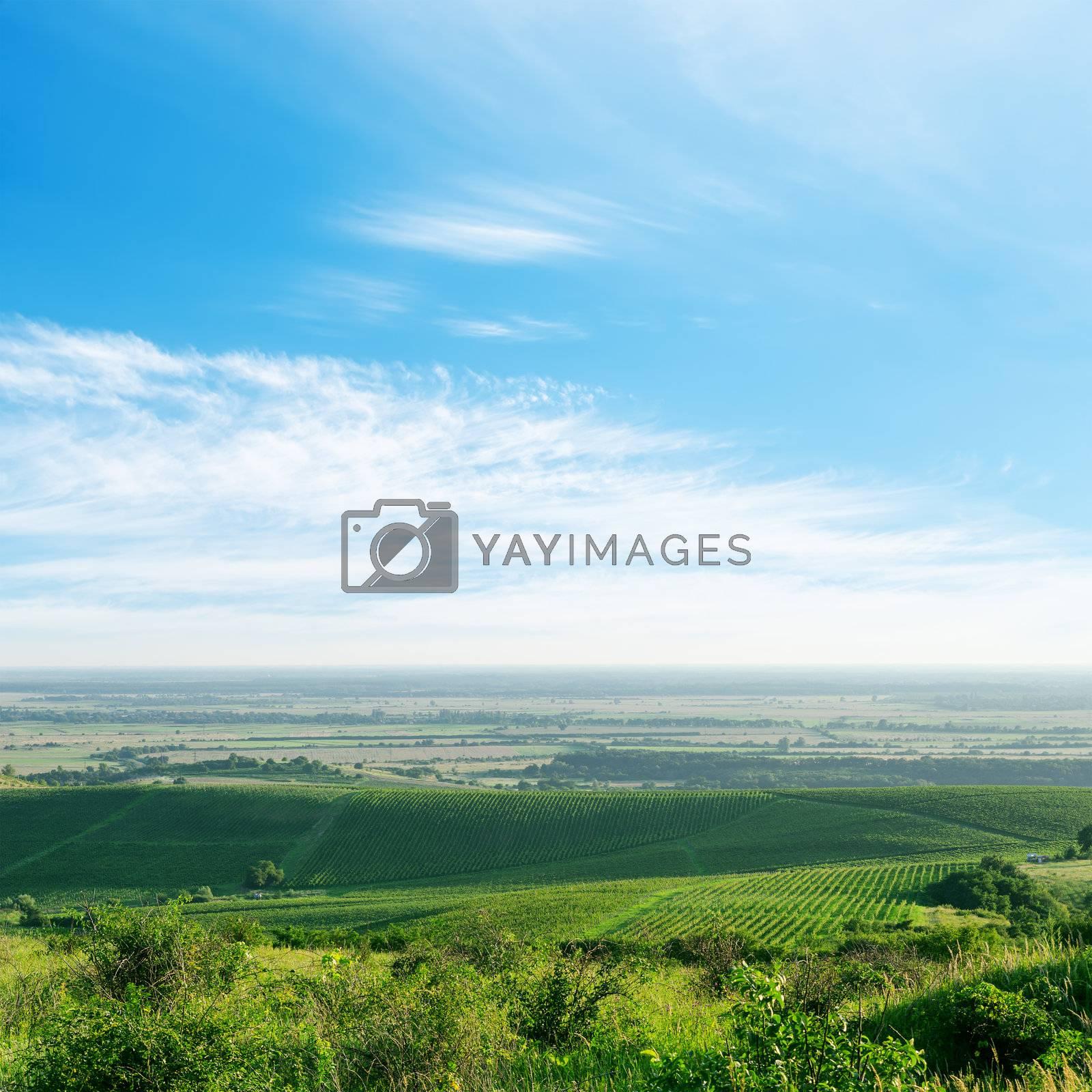 light clouds over green vineyard. Ukraine, Trans-carpathian region