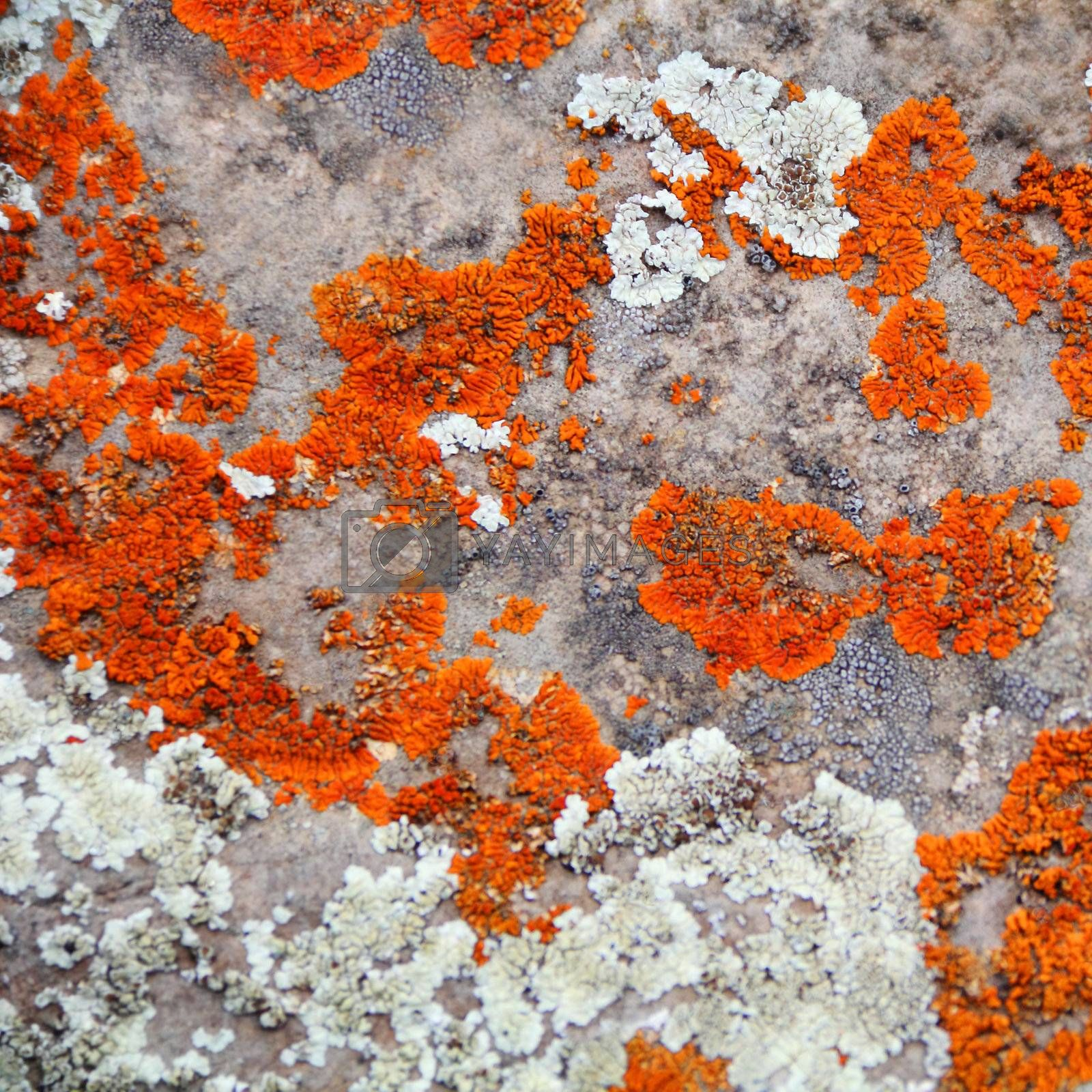 Image of texture with colorful mineral