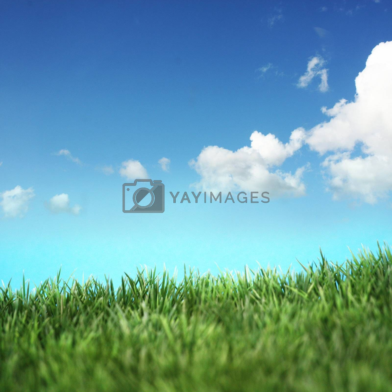 Green field and blue sky with white clouds