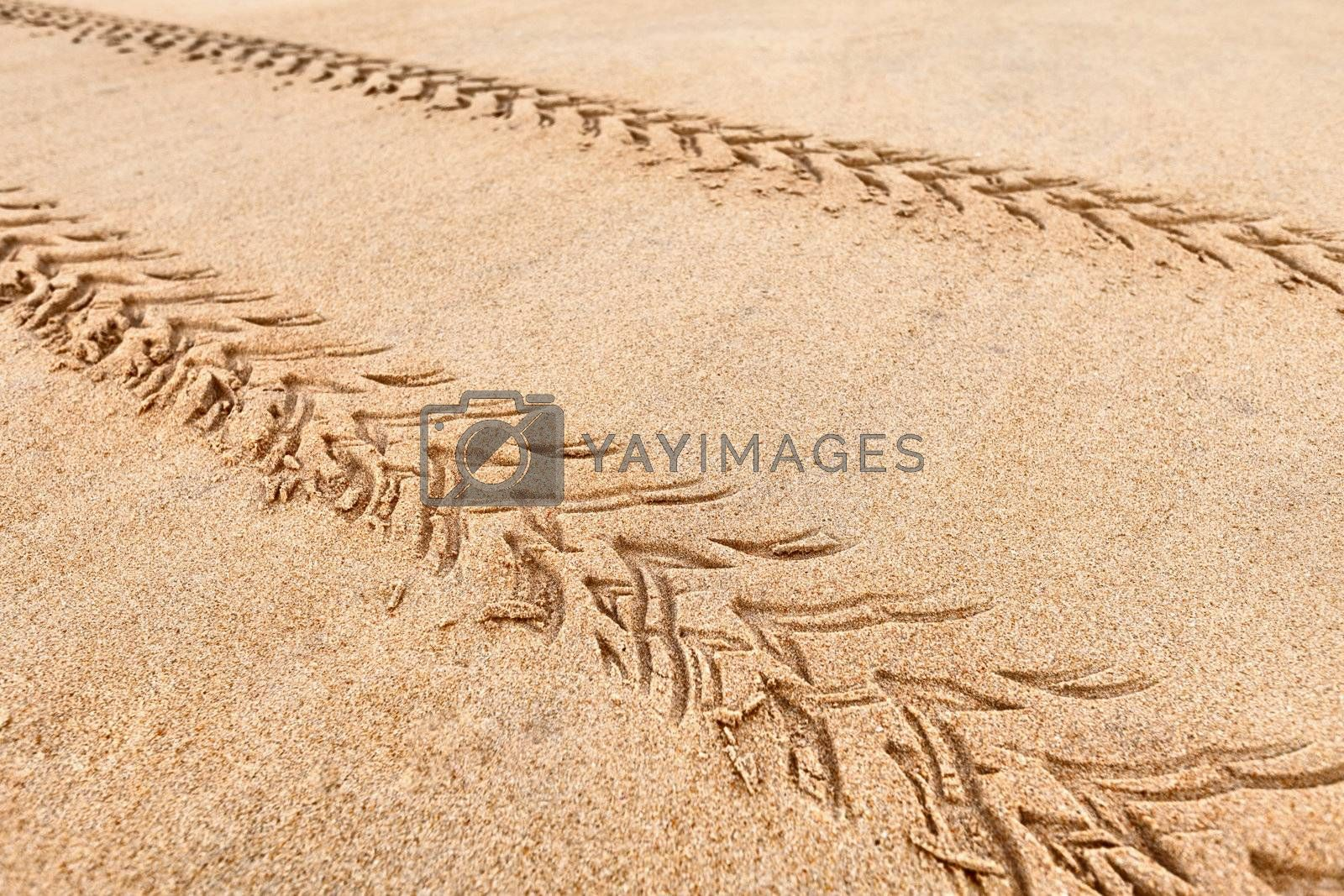 Traces of the quad on the beach sand