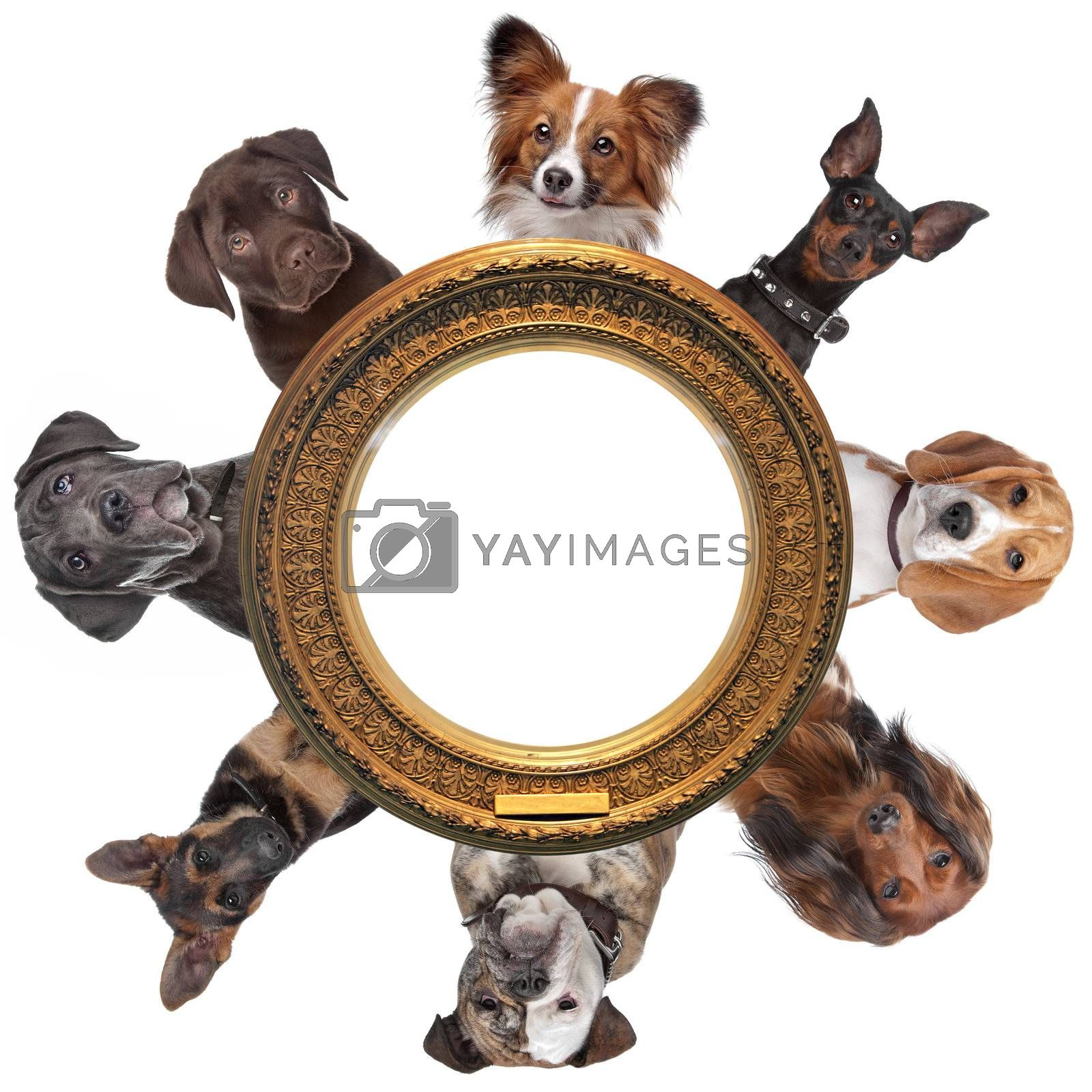 a group of dog portraits around a round golden picture frame in front of a white background
