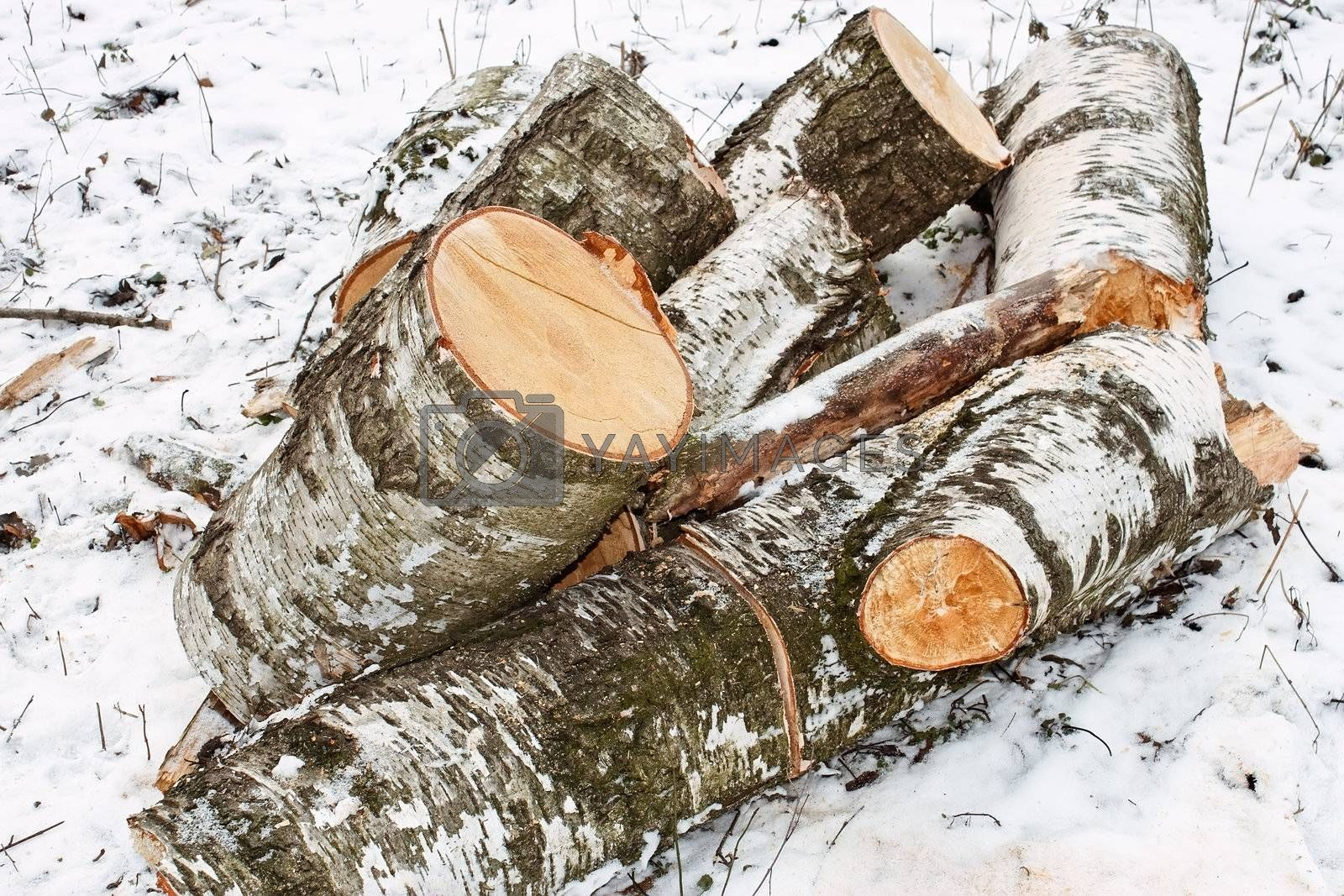 Pile of cut birch logs on the ground covered with snow