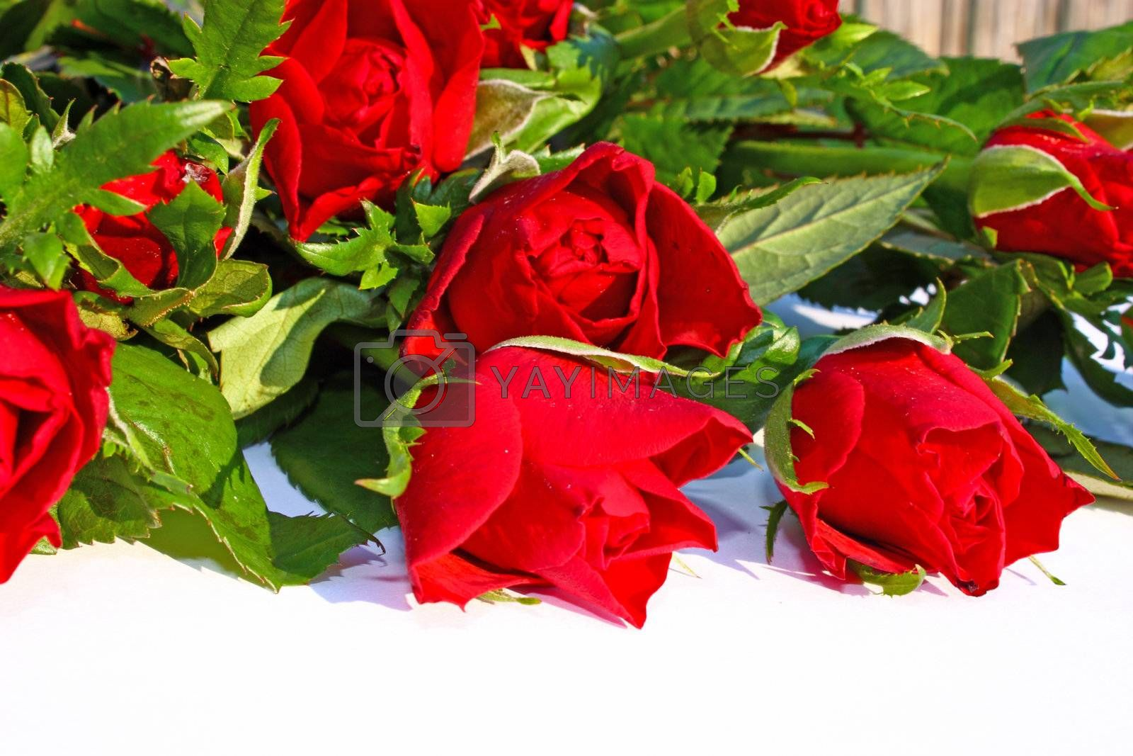 Bouquet of beautiful red roses on white