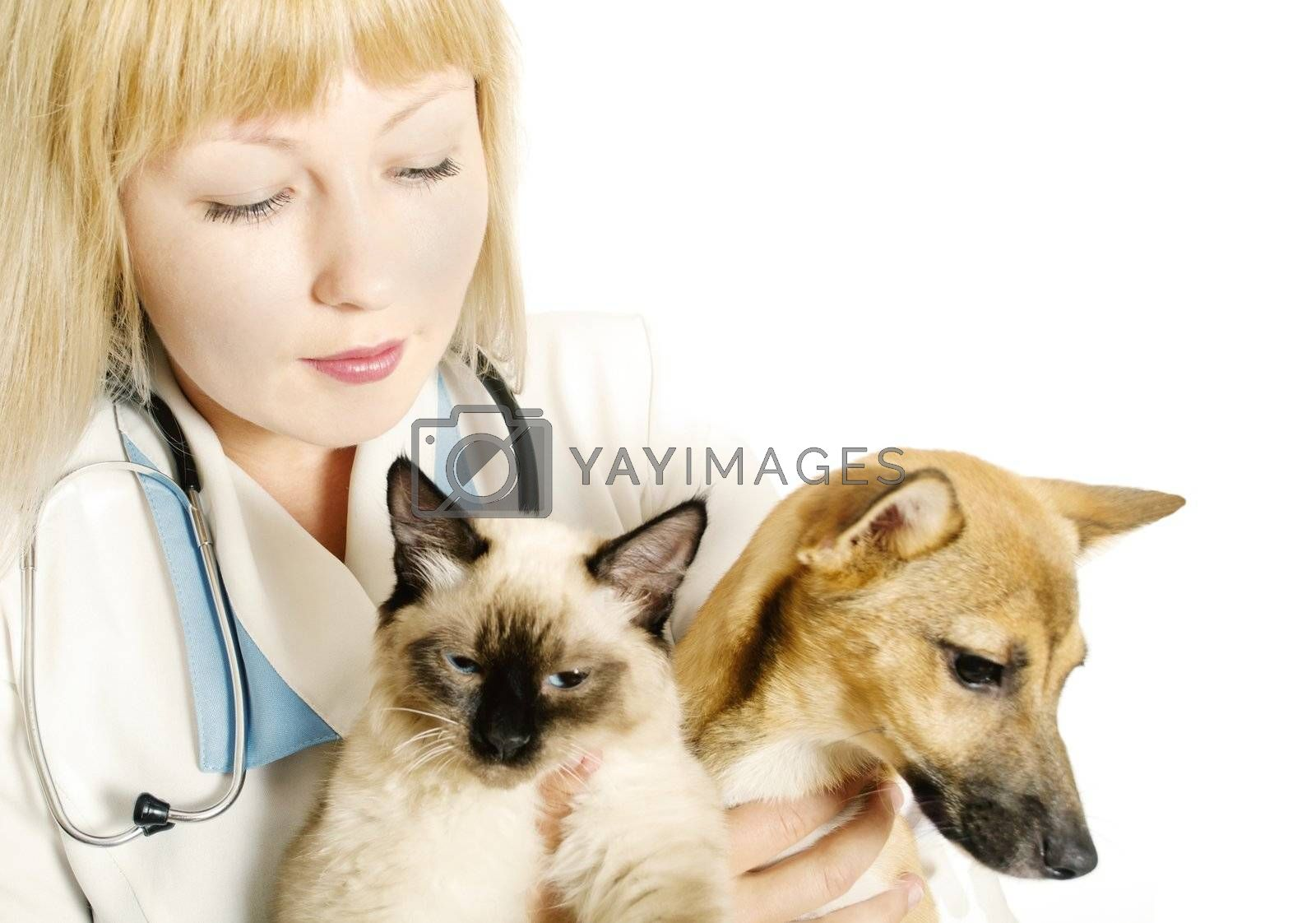 Woman veterinarian with two animals, a cat and a dog
