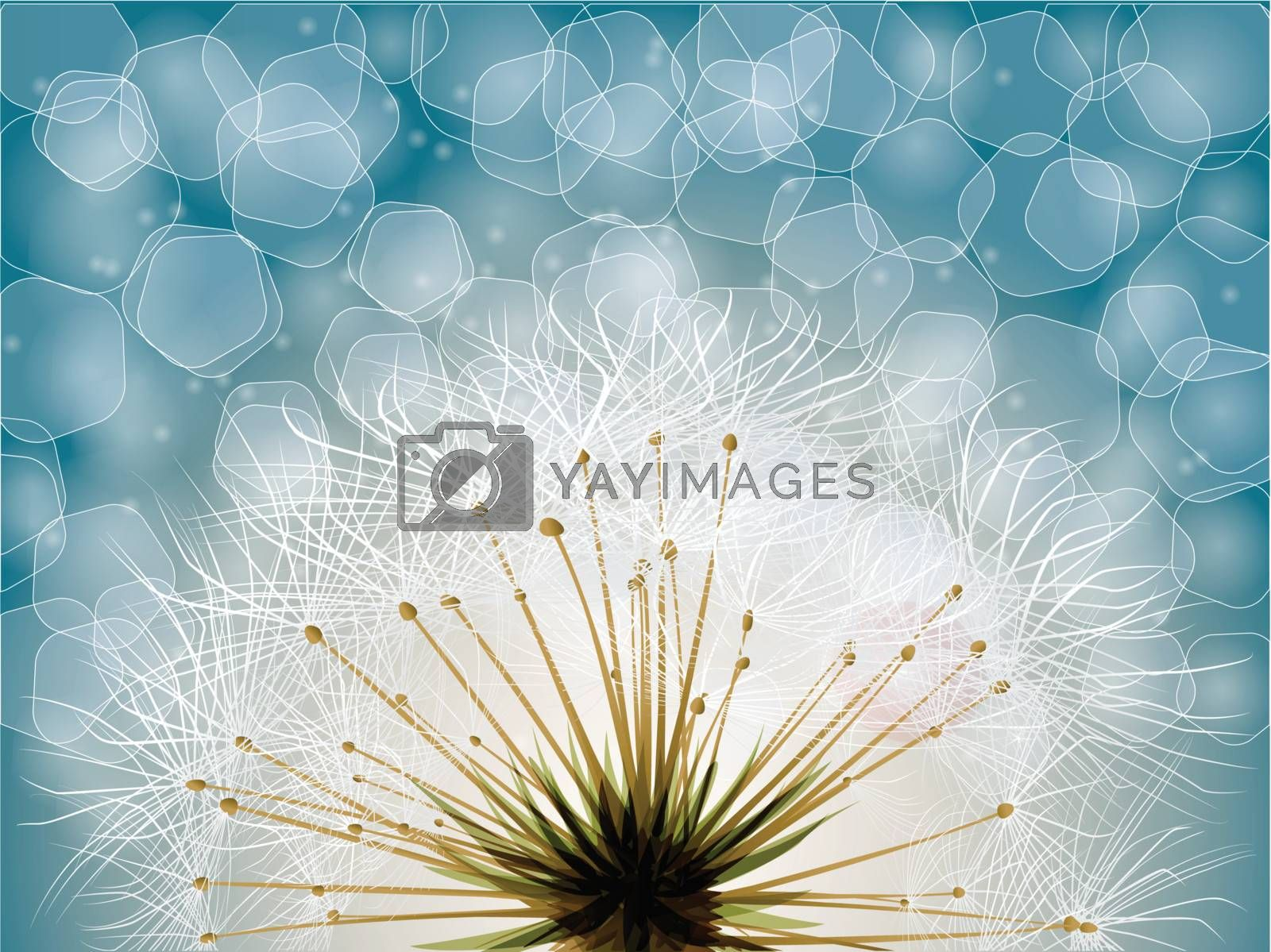 Royalty free image of Extreme macro shot of fluffy dandelion seeds by nirots