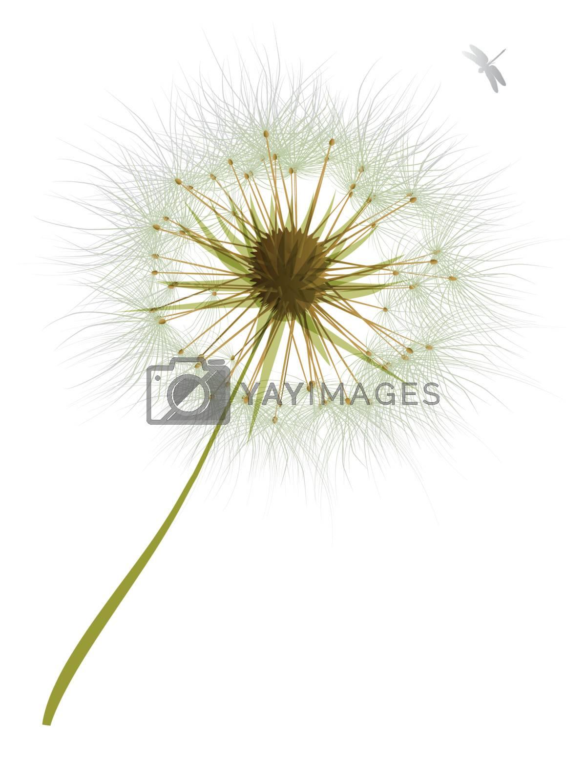 Royalty free image of vector Dandelion Wind Blow Flower by nirots