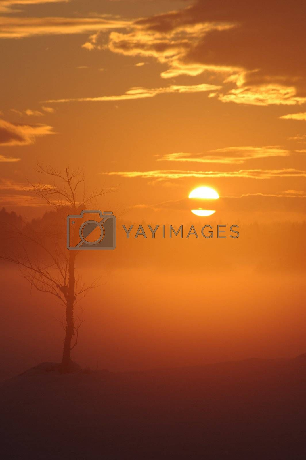 a romantic misty winter golden orange sunset