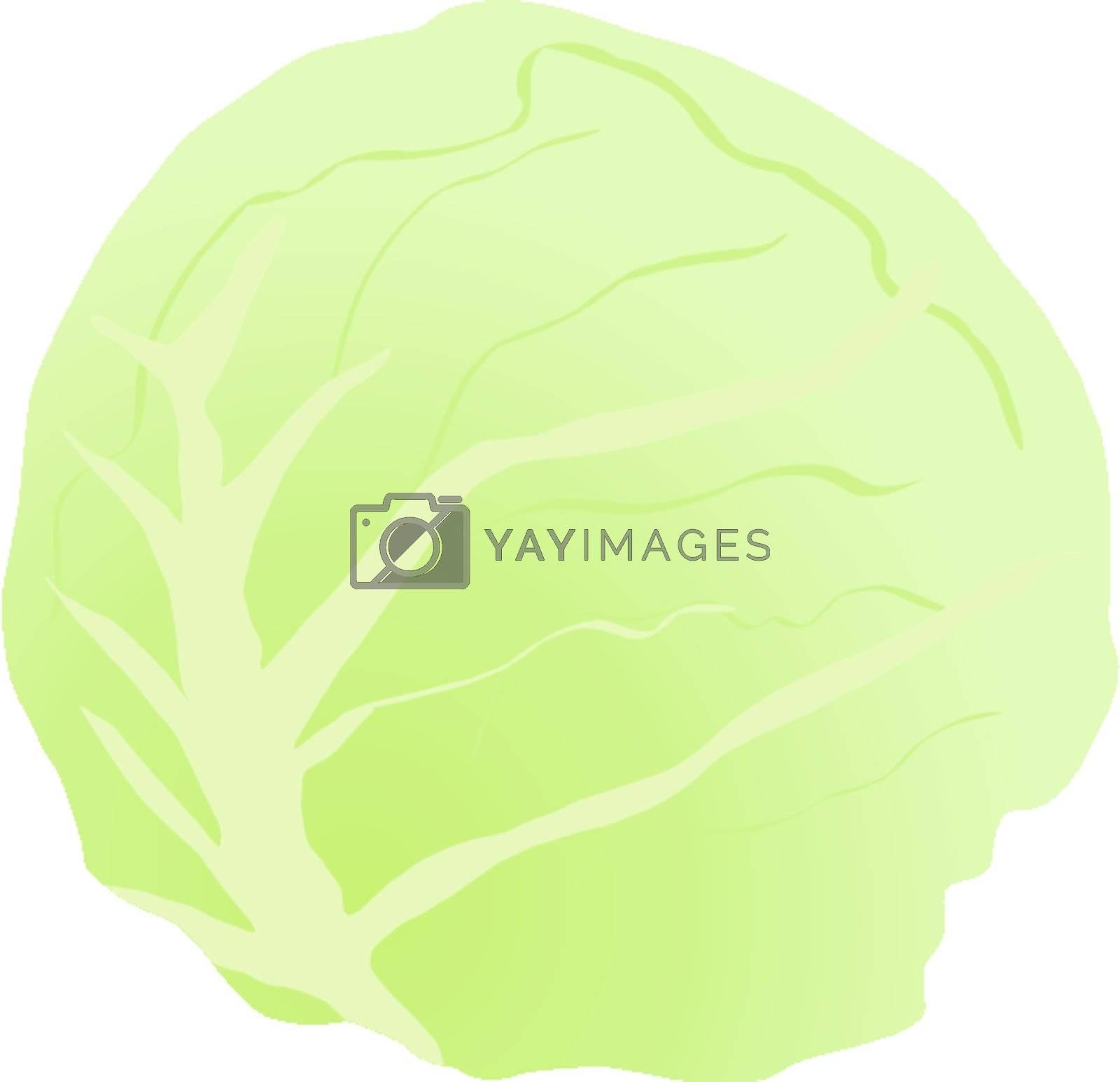 green cabbage stalk