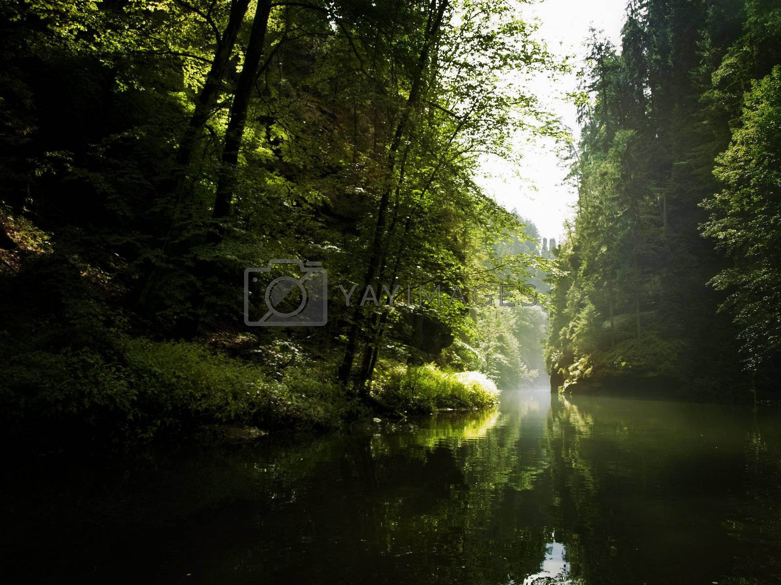 the river through the rocks in wild forest (Czech Switzerland)