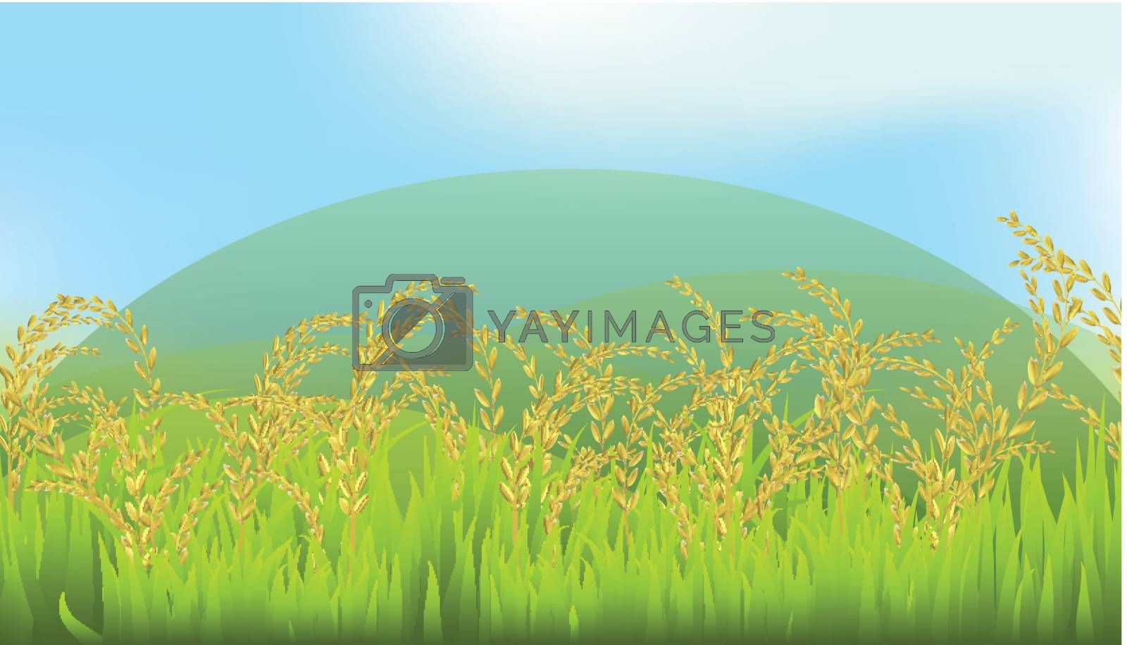 Thai White rice  fields illustration  mountains and the sky in the background
