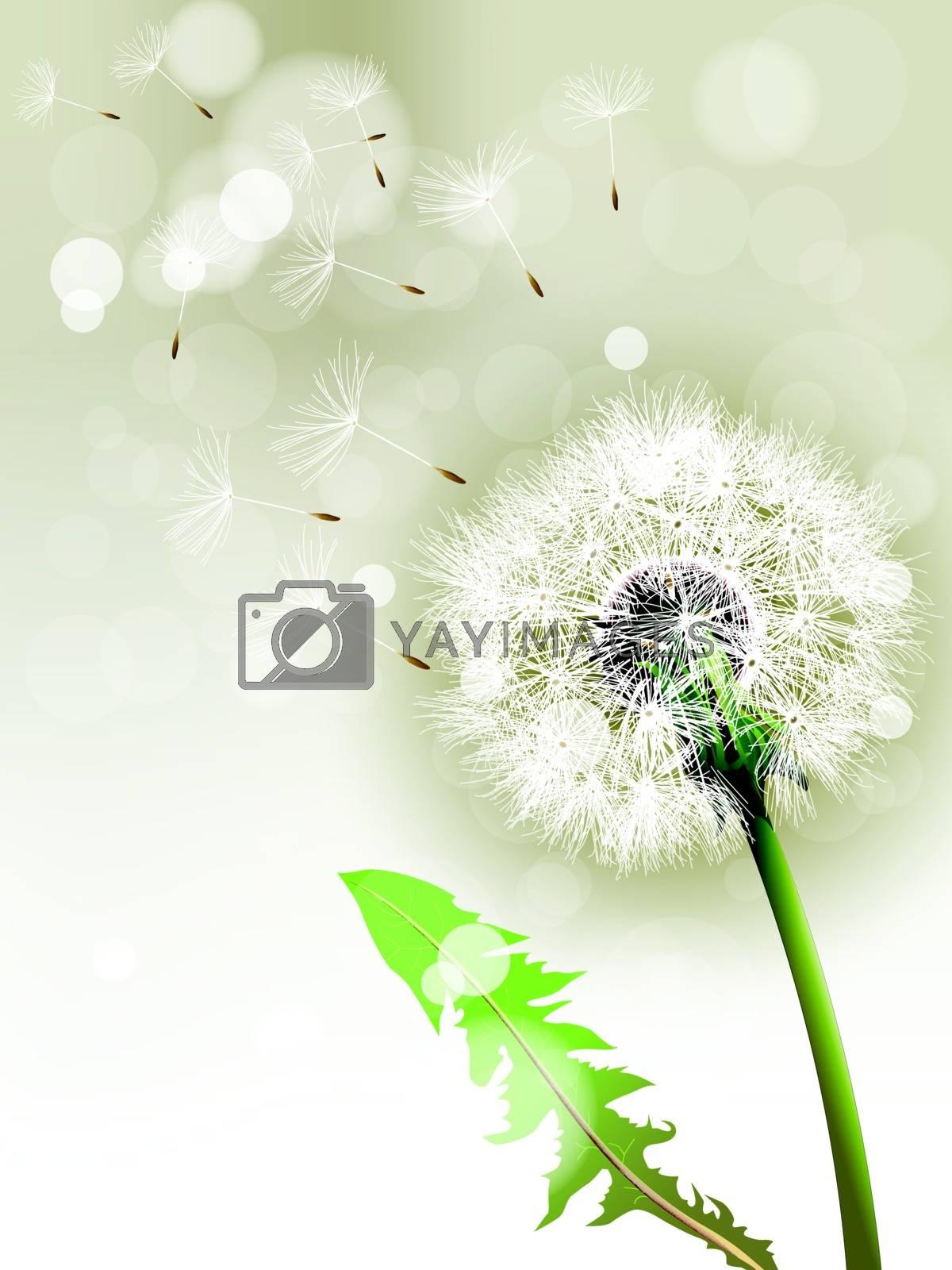Vector Dandelion