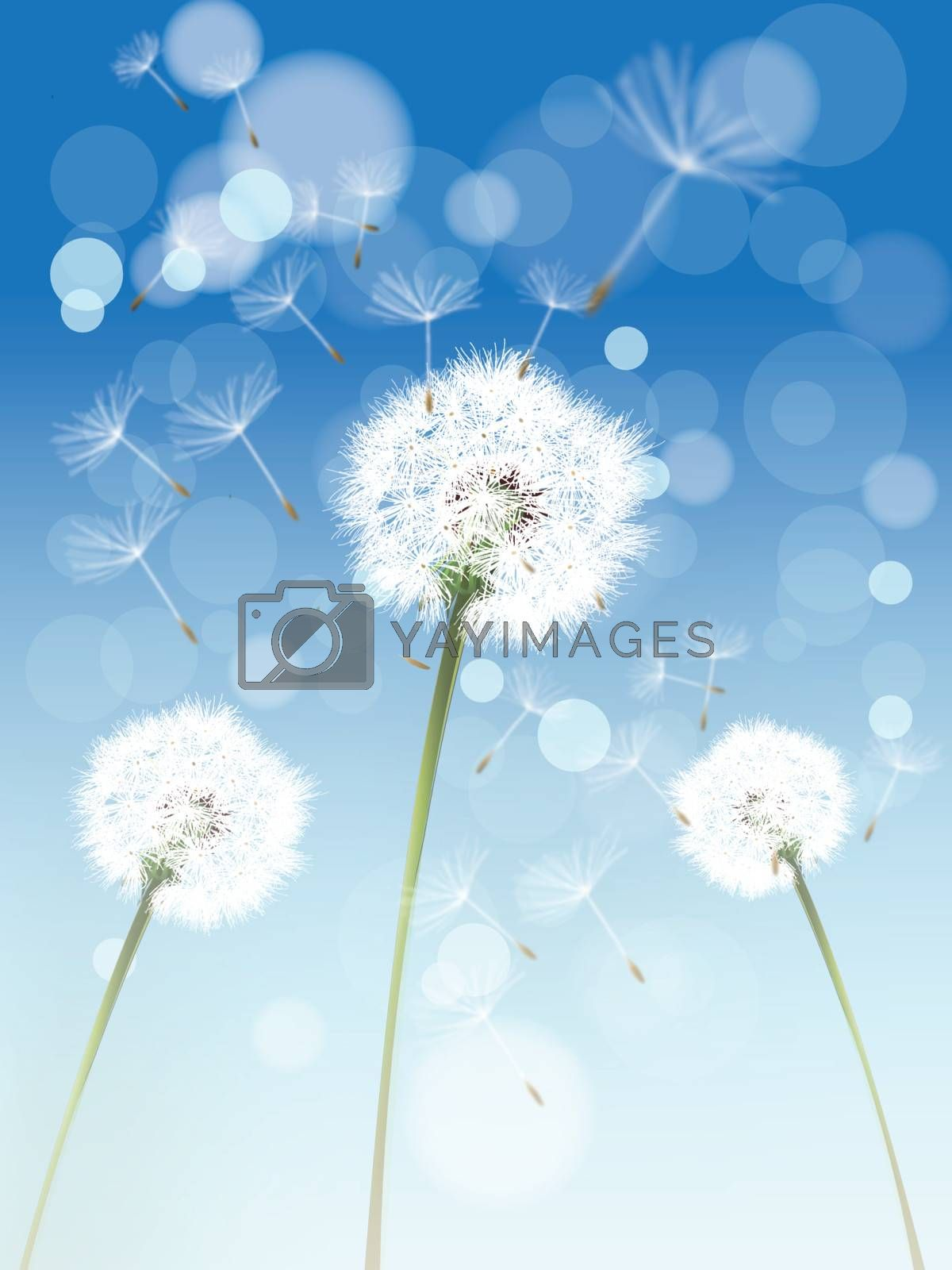 Royalty free image of Dandelion by nirots