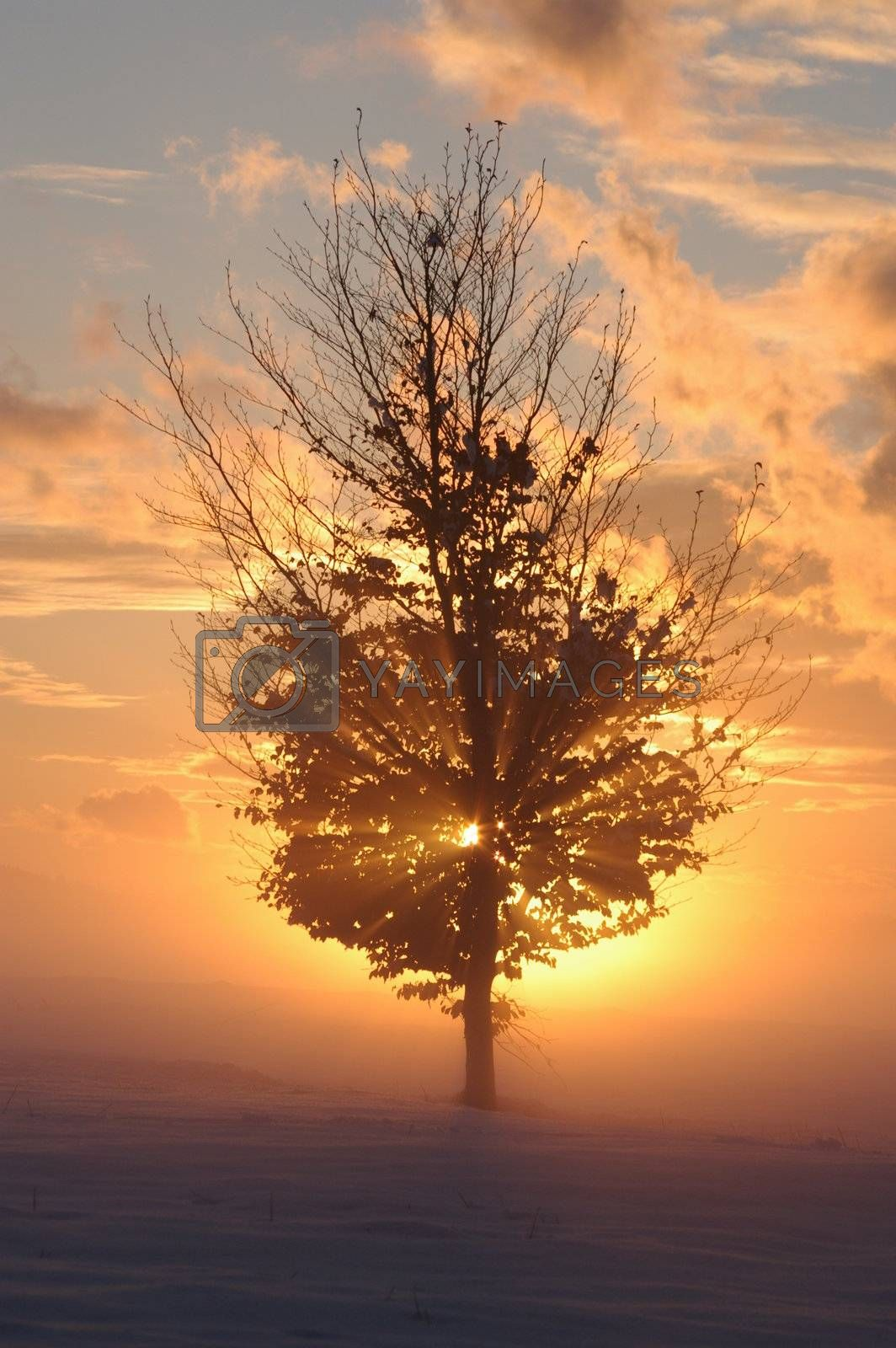 a romantic misty winter sunset with tree