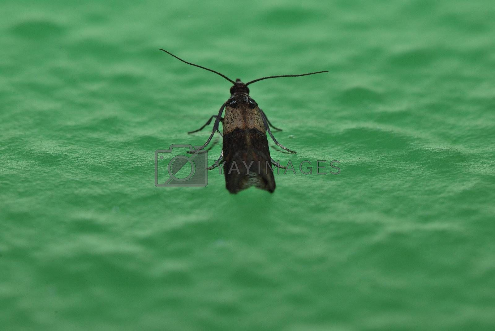 small moth sitting on a big green wall in the house view