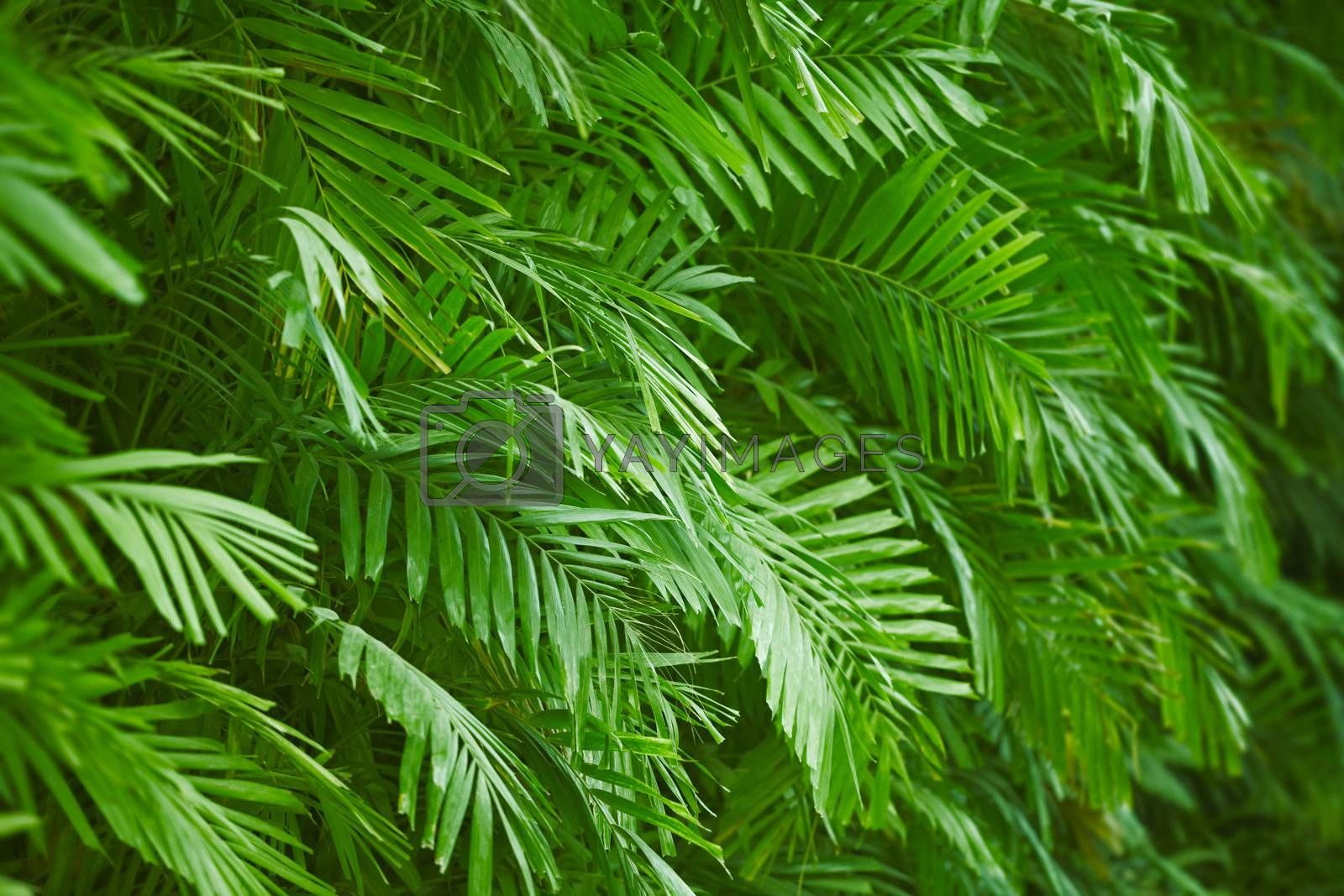 Background - the palm green foliage