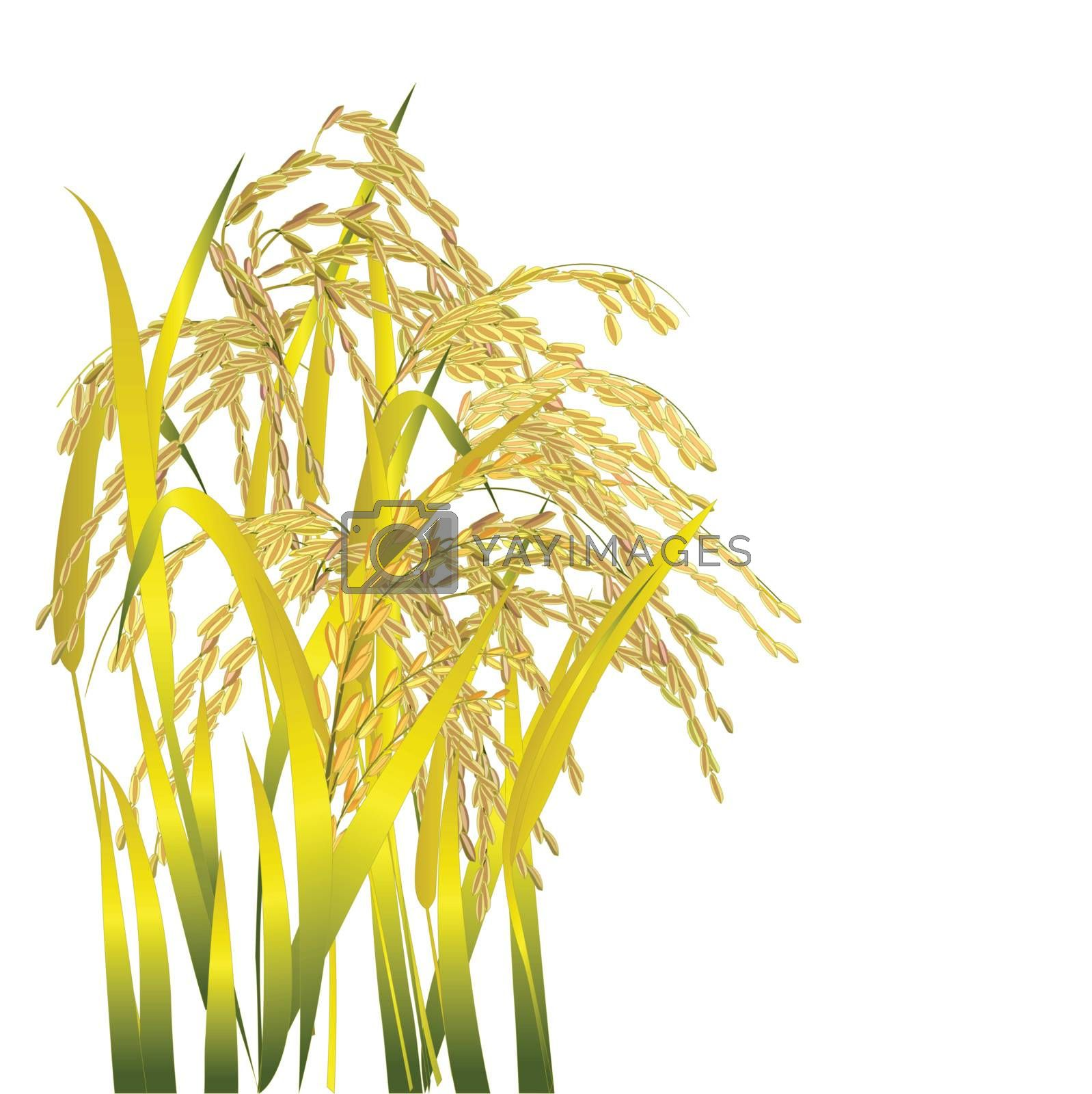 Rice grain paddy and leaf isolated on white