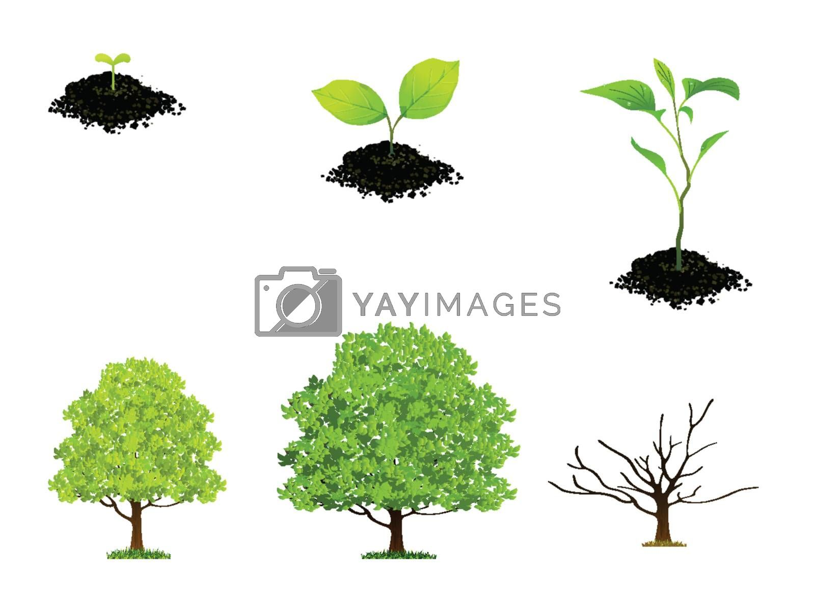 Sprouts and tree Isolated On White Background