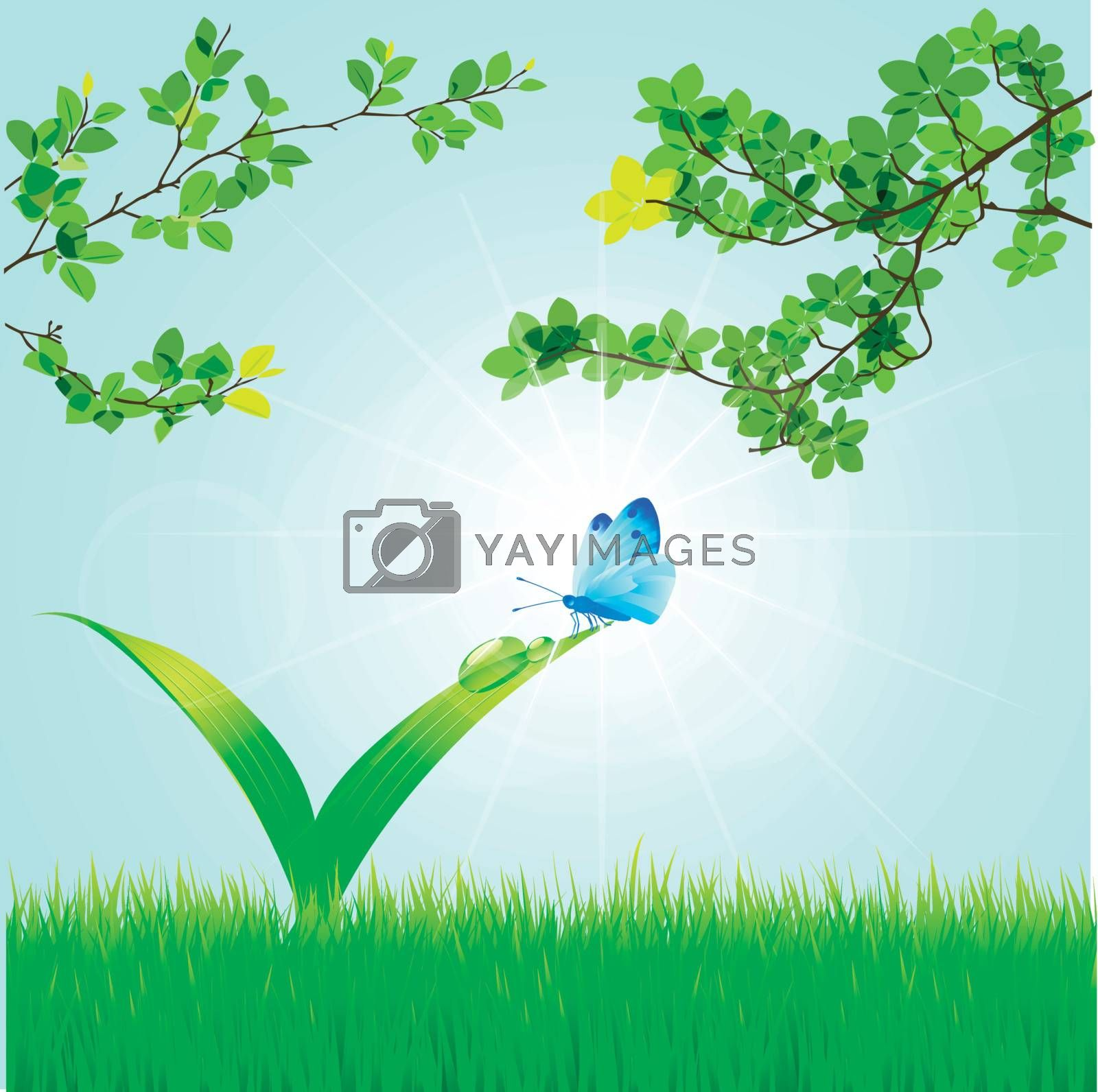 Spring background with a grass, leaves, dew, butterflie