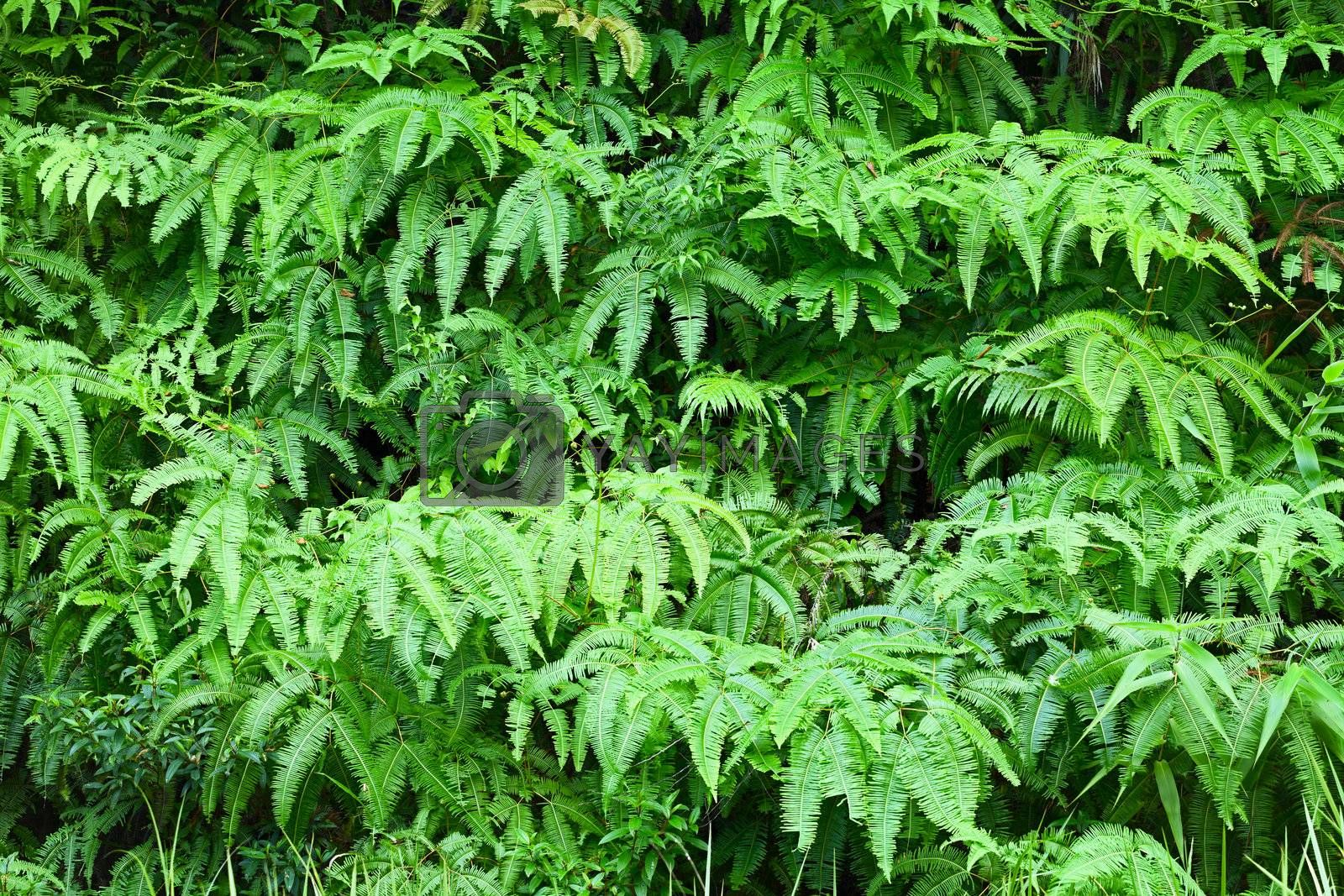 Fern leaves background by pzaxe