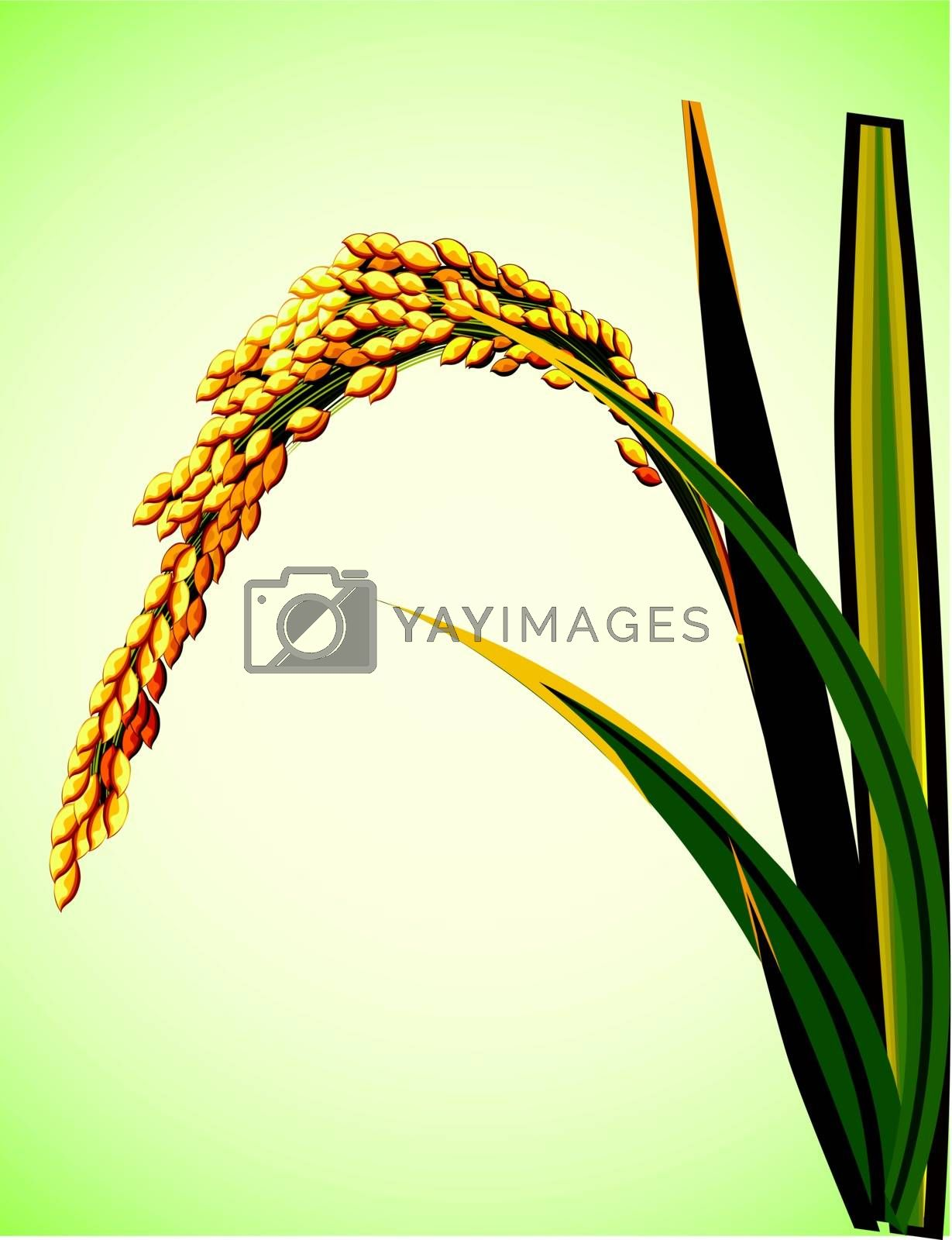 Illustration of spike rice in Asia