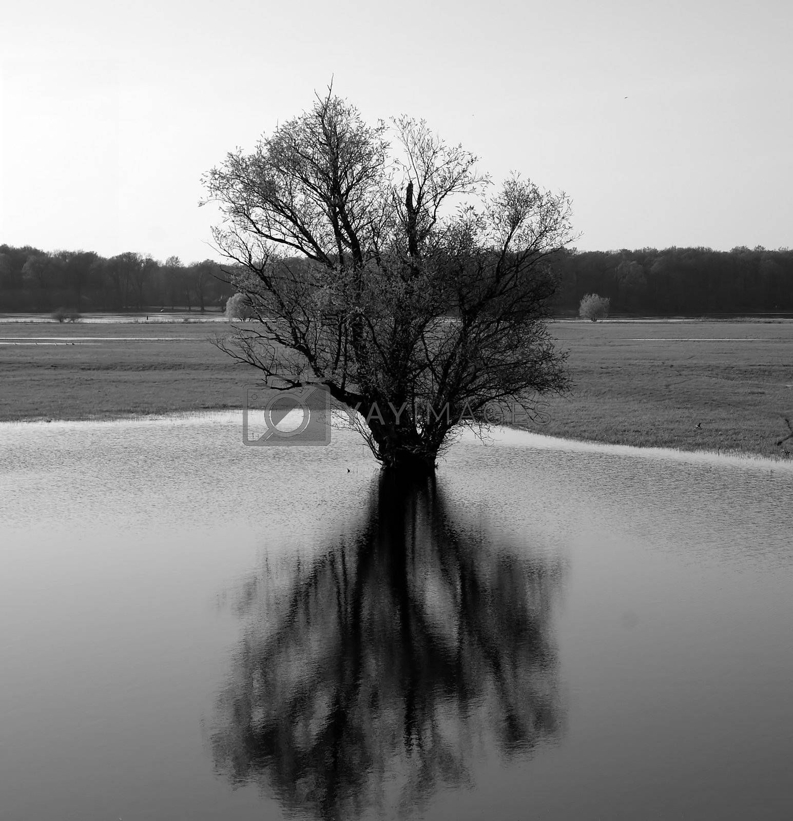 Tree reflection on the water surface of a pond in the nature protection area Elbe Valley.