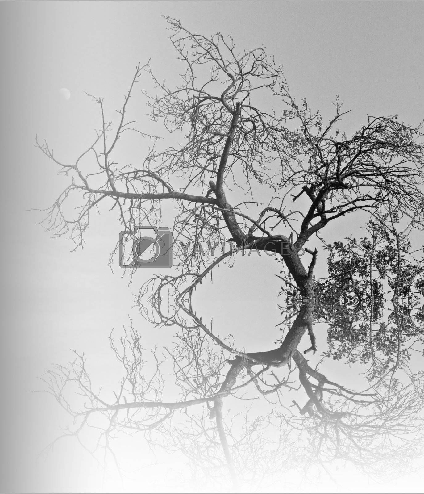 Abstract branch reflection with the moon in the background. Monochrome fine art.