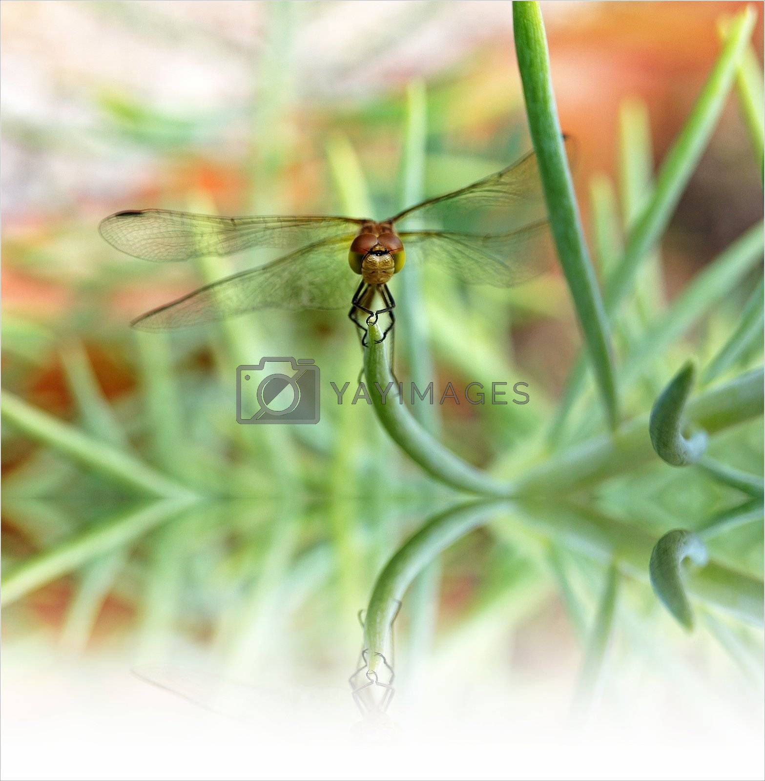 The close-up photography of a dragonfly on a green plant.