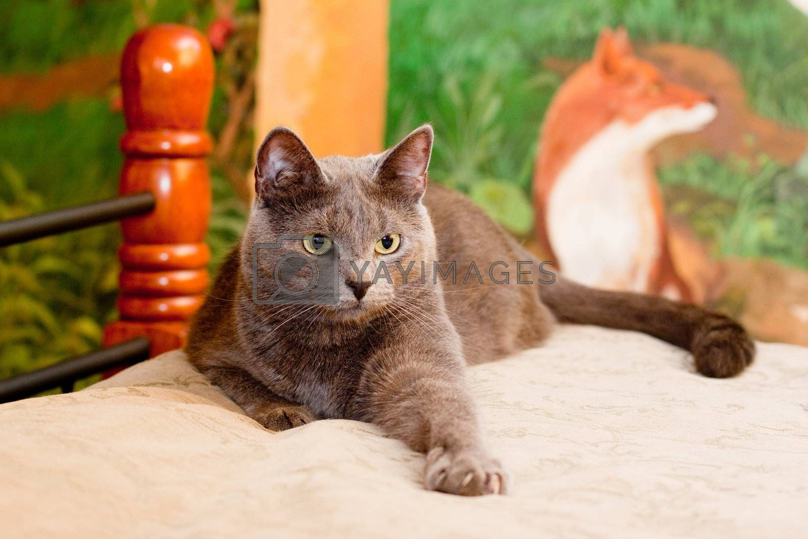 A gray cat lying on a bed in front of image