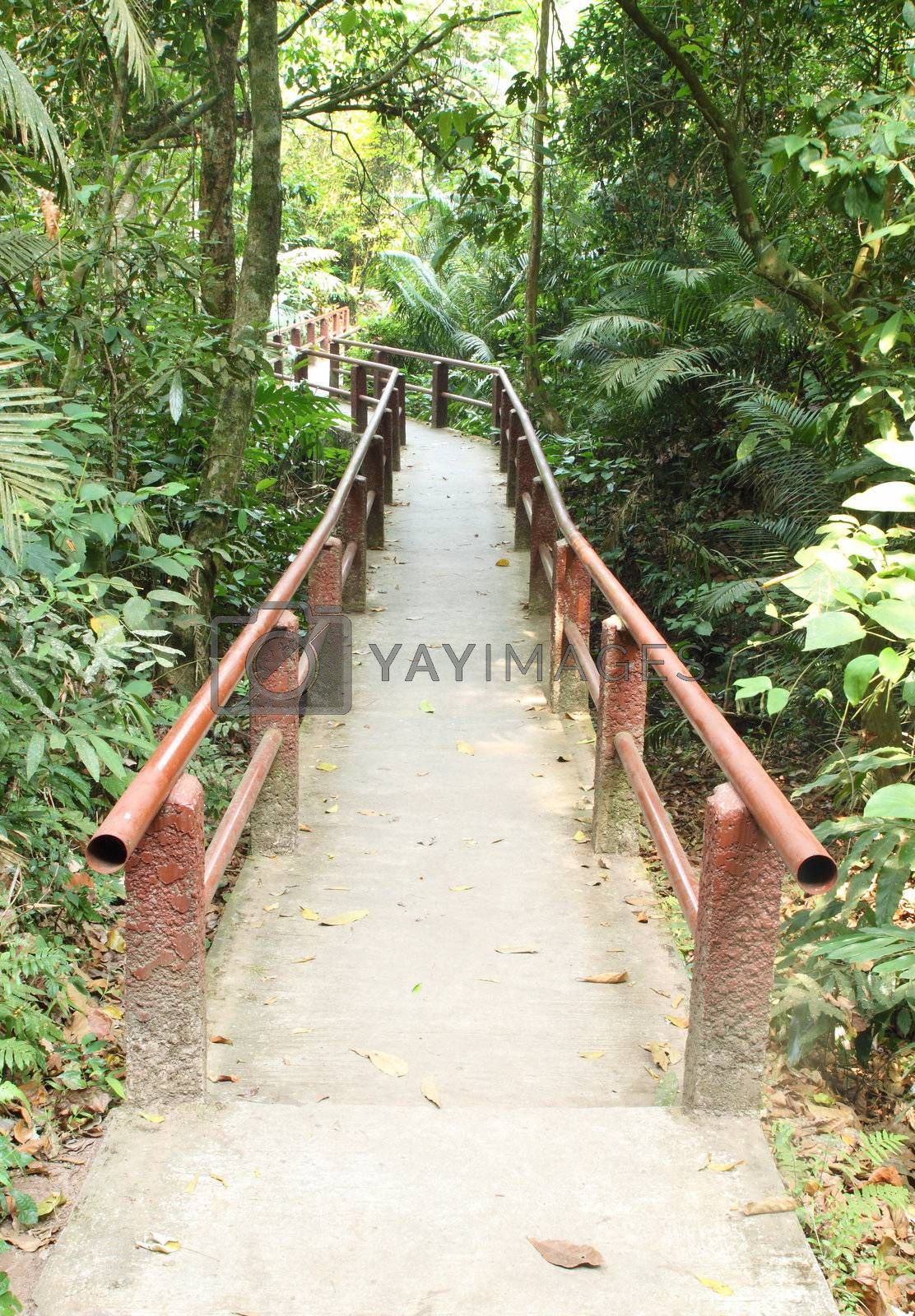 Footpath in the forest of Khao Yai national park in Thailand