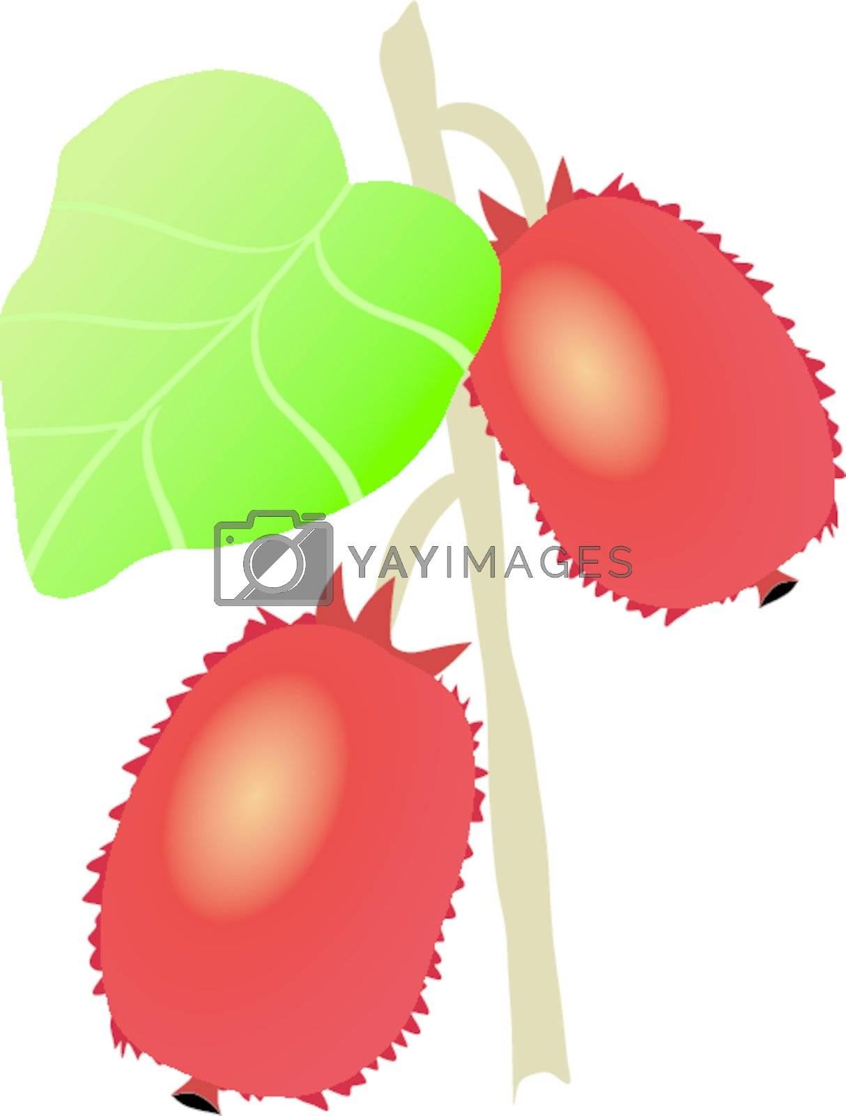 actinidia plant on the white background