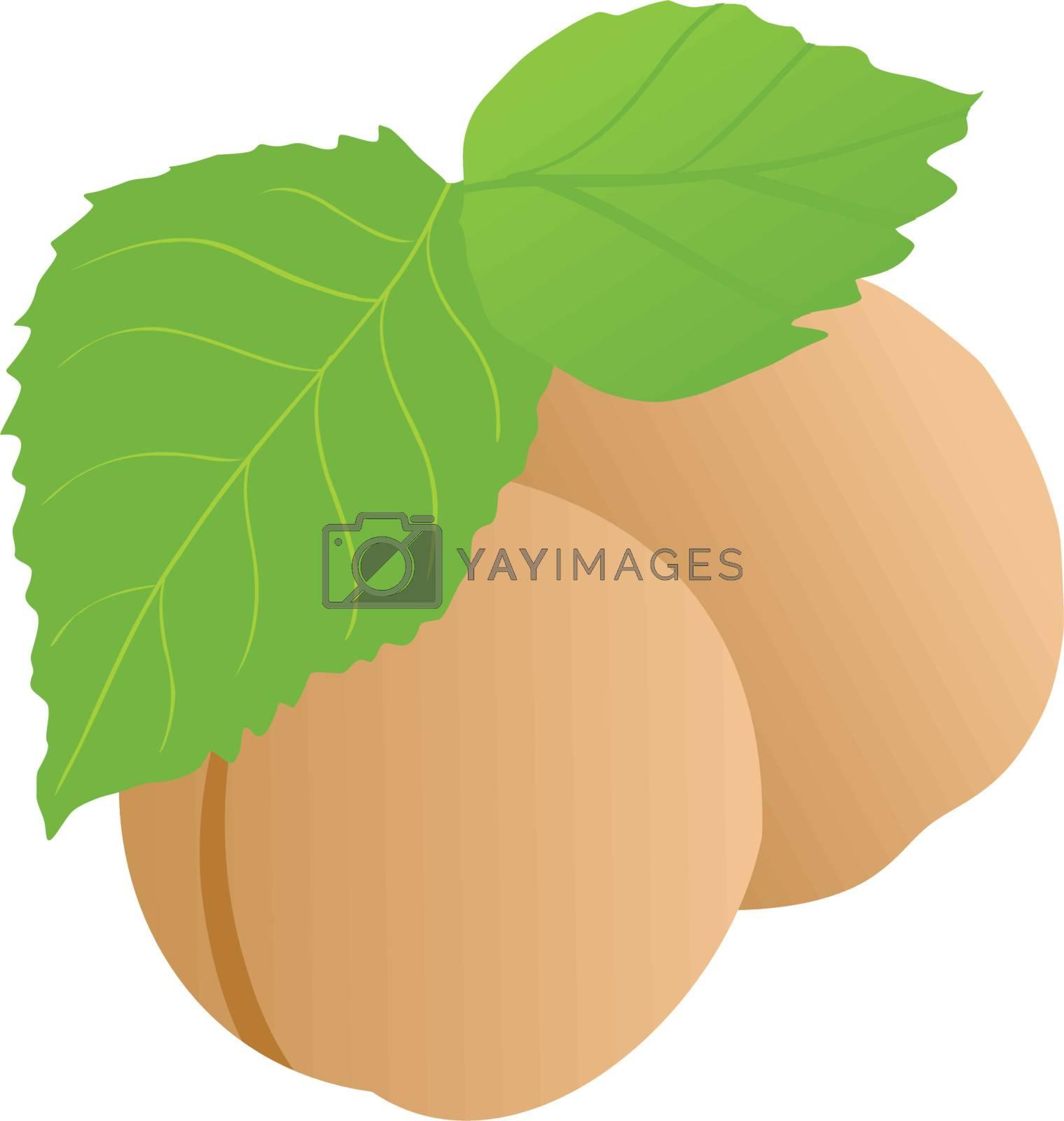 Couple of apricot