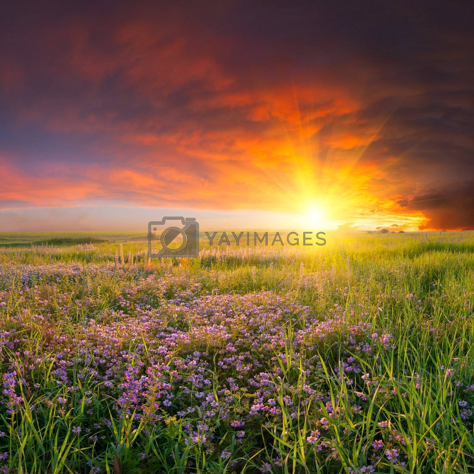 Summer landscape with flower meadow and majestic clouds in the sky on sunset