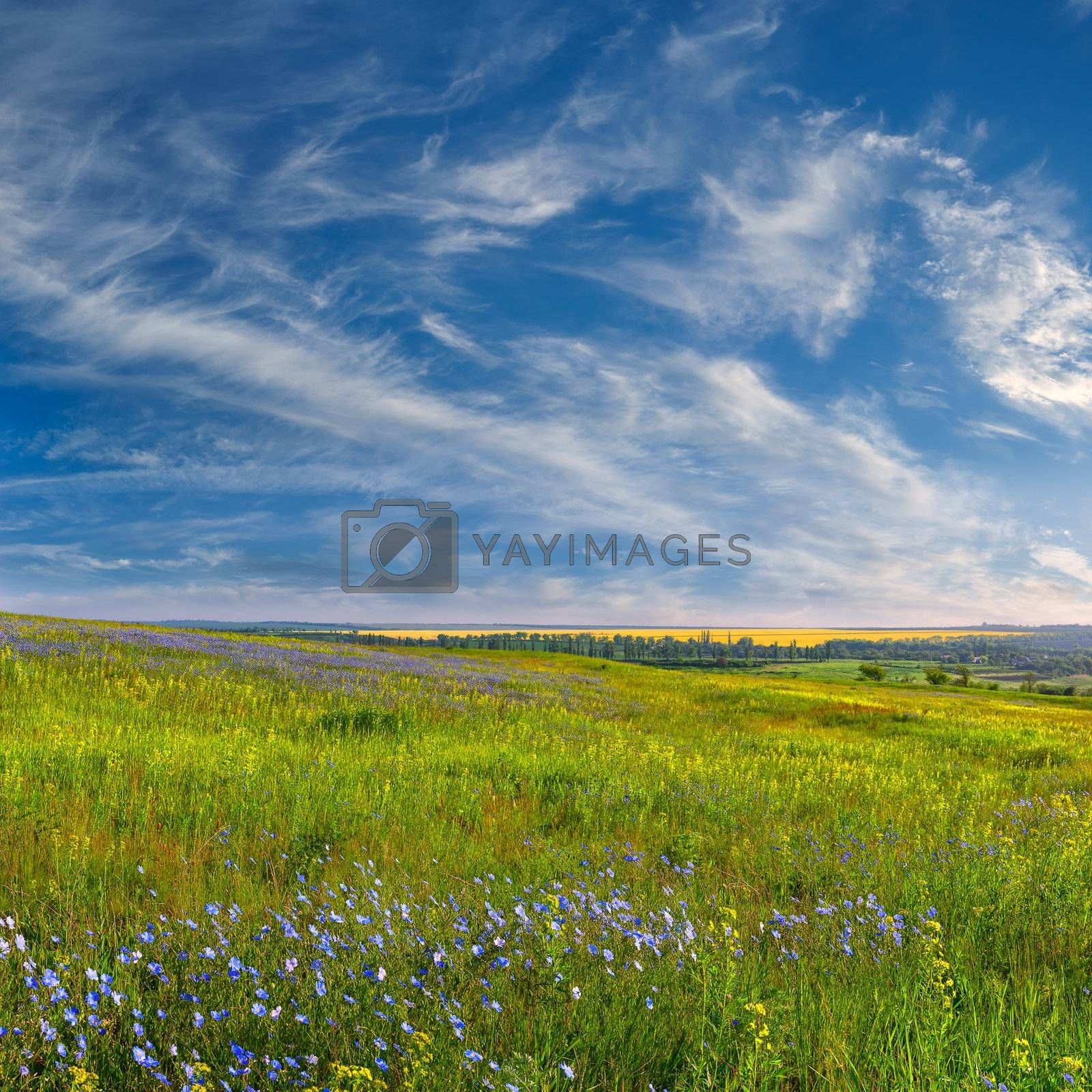 Summer landscape with blue flower meadow and beautiful clouds in the sky