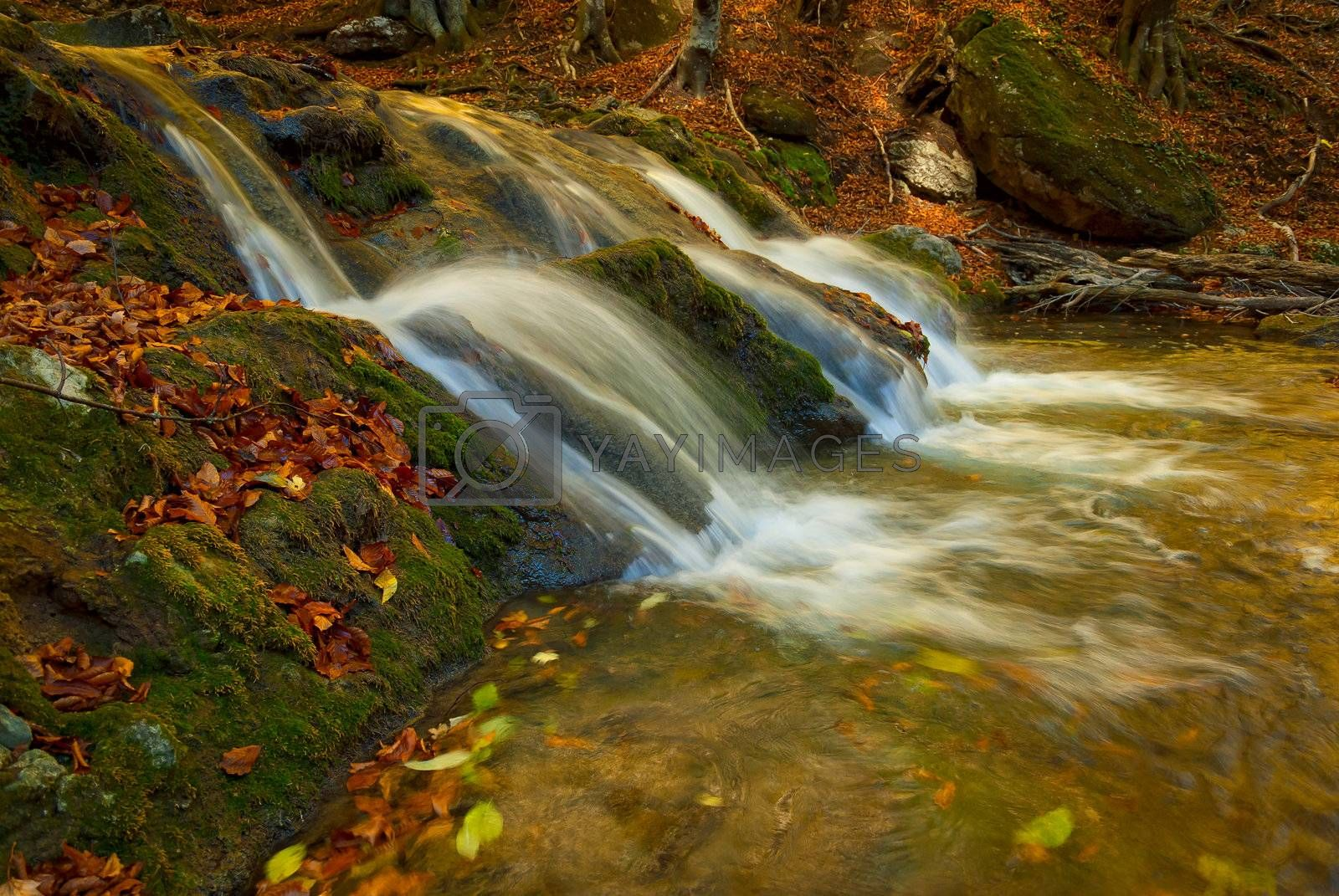A small waterfall in mountains is surrounded by moss and fallen autumn maple leaves