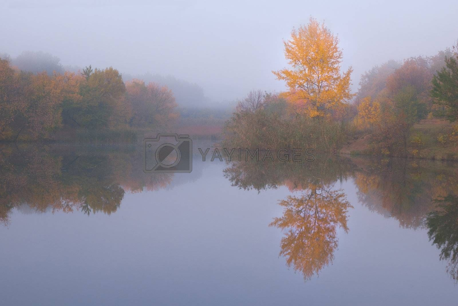 Beautiful autumn landscape with yellow tree on coast of the river and reflection in water