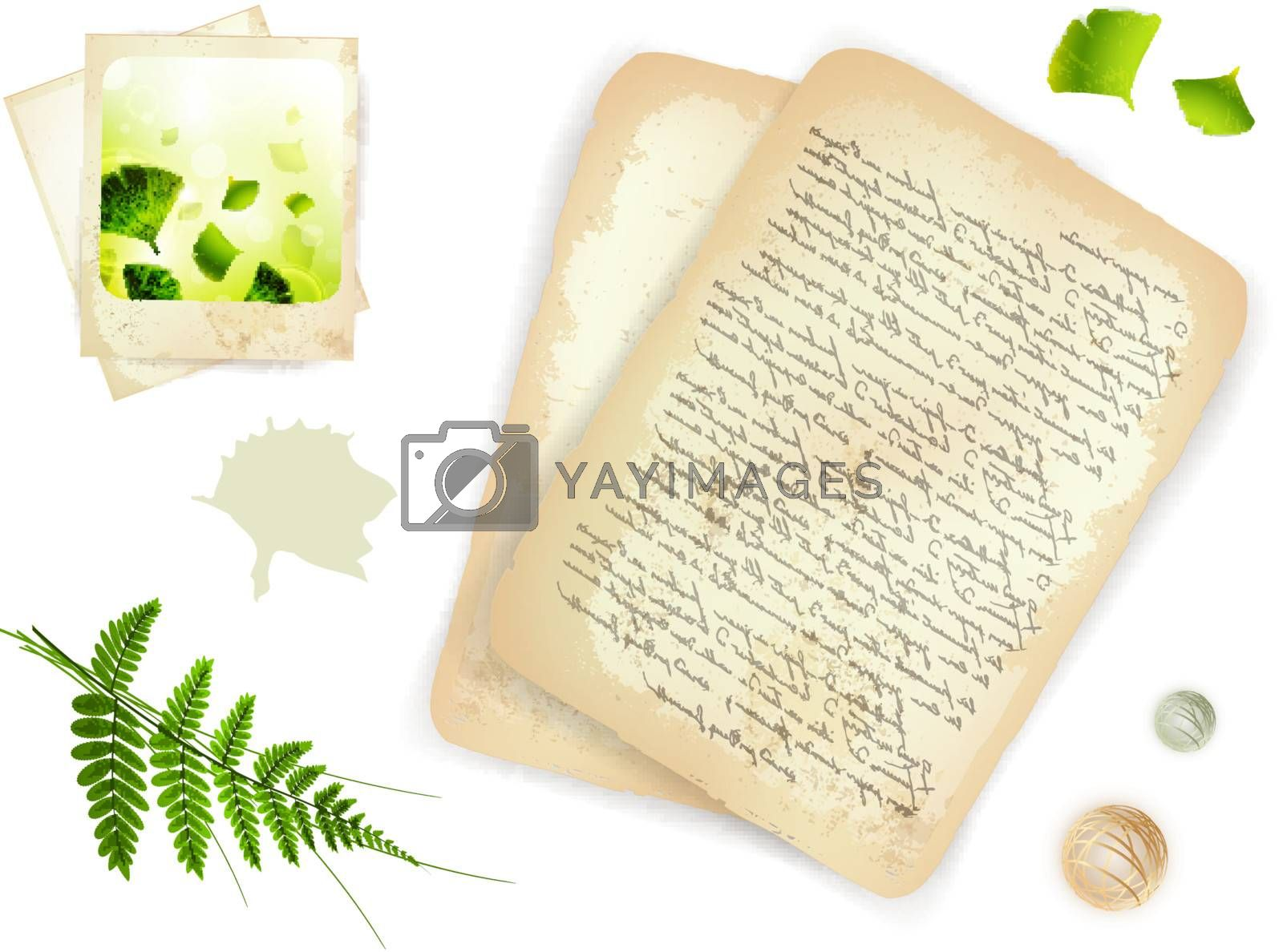 Vintage objects: 18th century letter, old nature photo and green leaves over white background