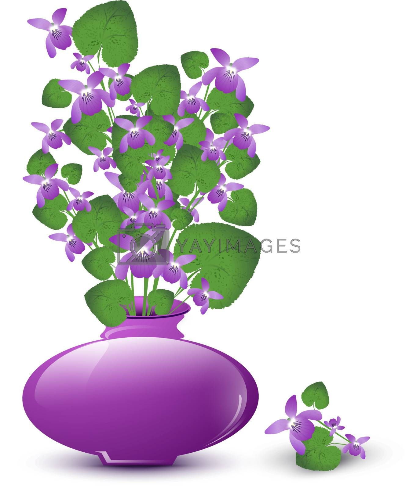 bunch of wild violet in vase over white background