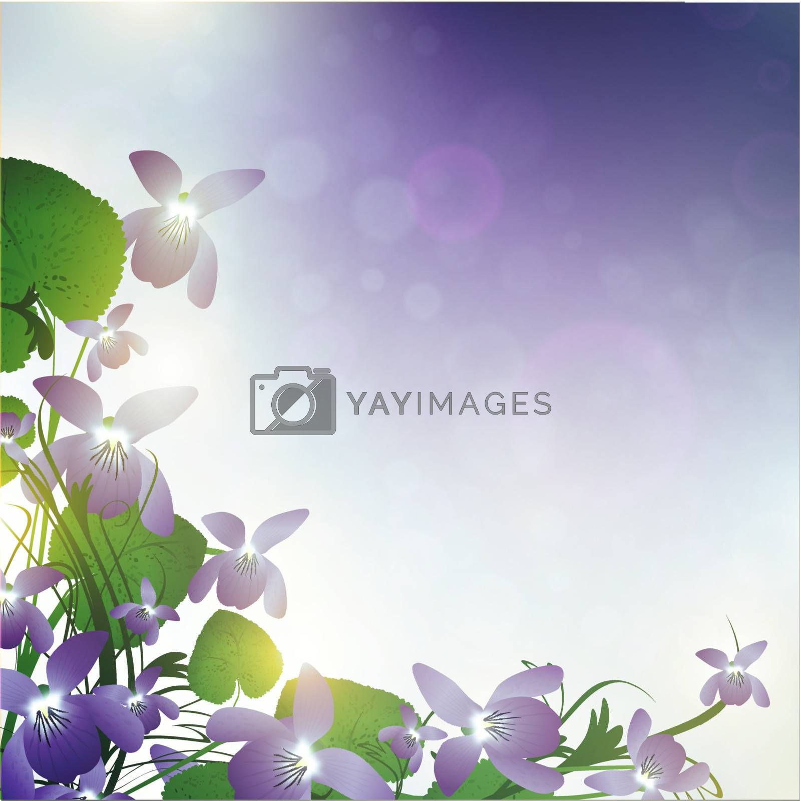 wild violet over blue background with bokeh