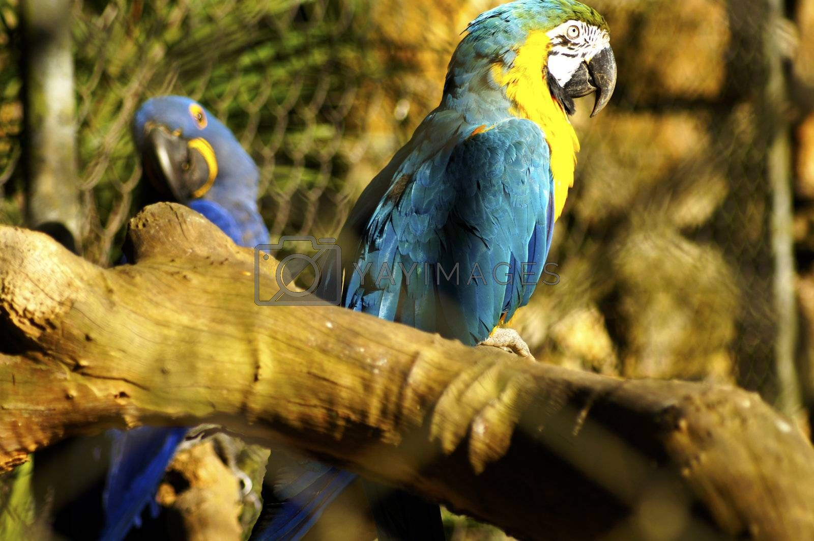 Brazil finds itself at an advantage before the biodiversity of birds that make their territory